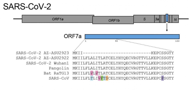У коронавируса обнаружены новые мутации. О чём это нам говорит?