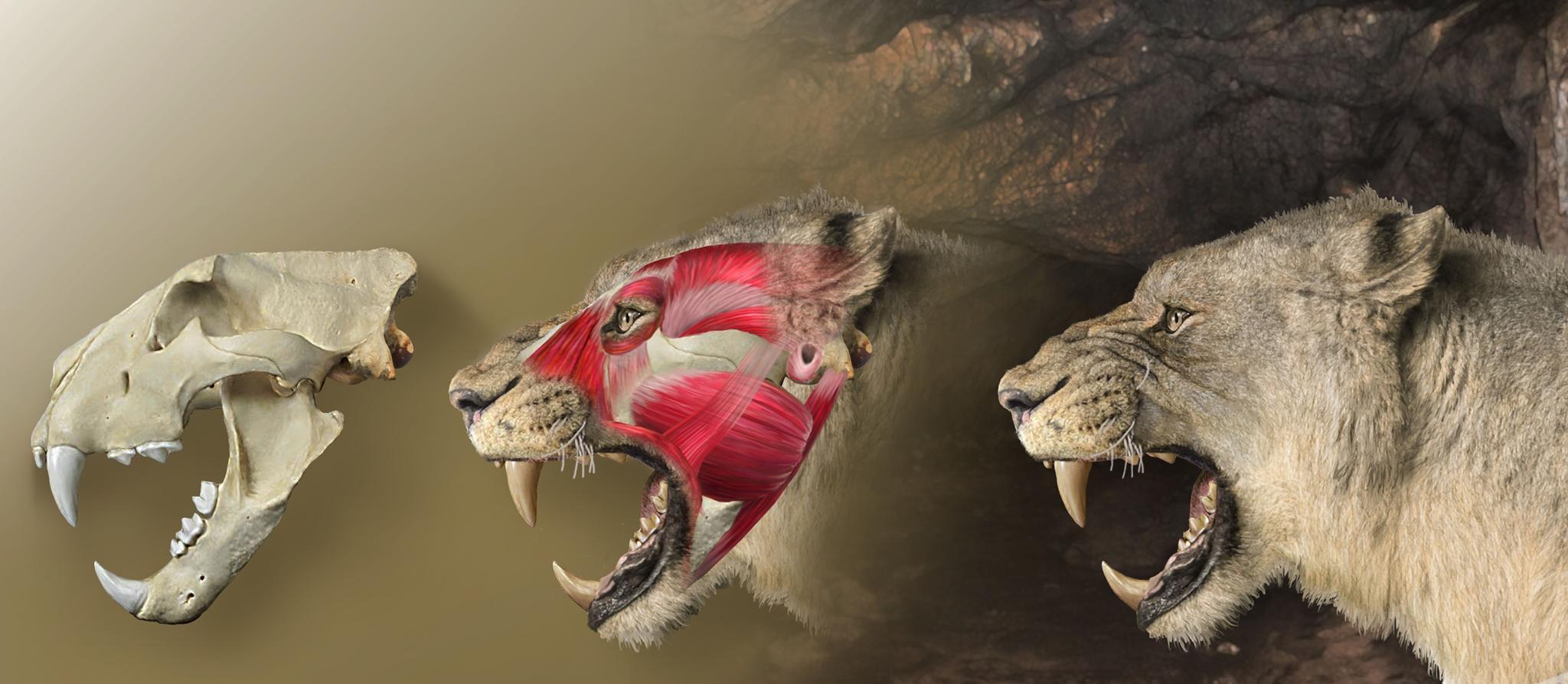 Пещерные львы ни с кем не скрещивались