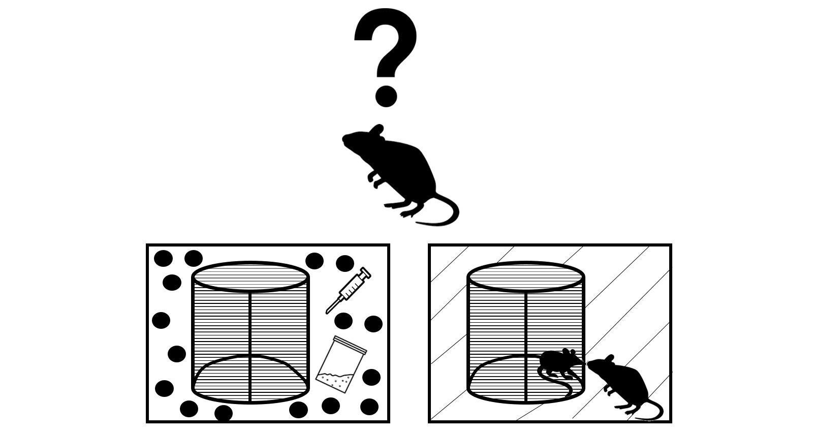 Новый друг отвлек мышей-наркоманов от кокаина