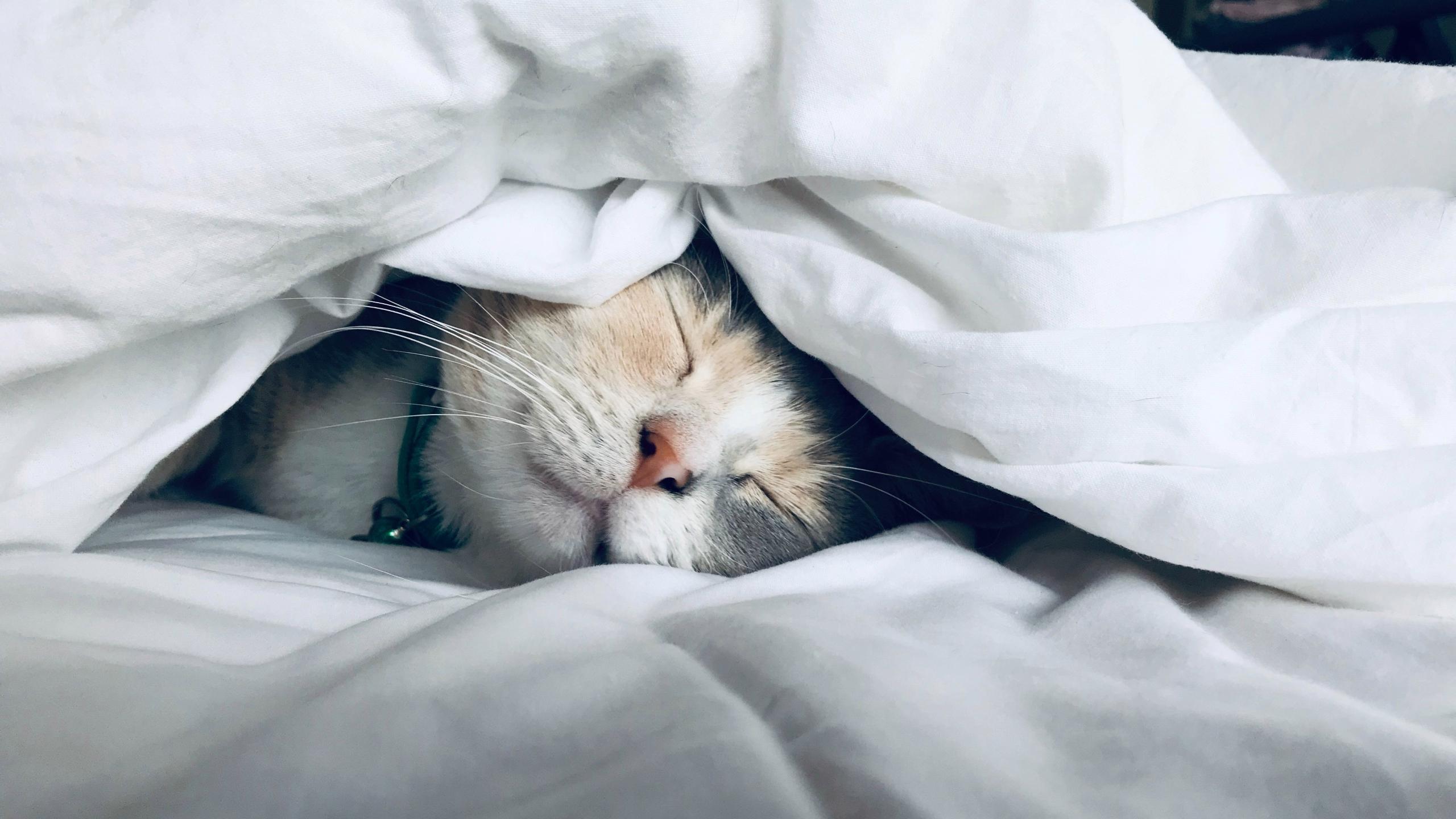 Почему холодными зимними утрами тяжело просыпаться
