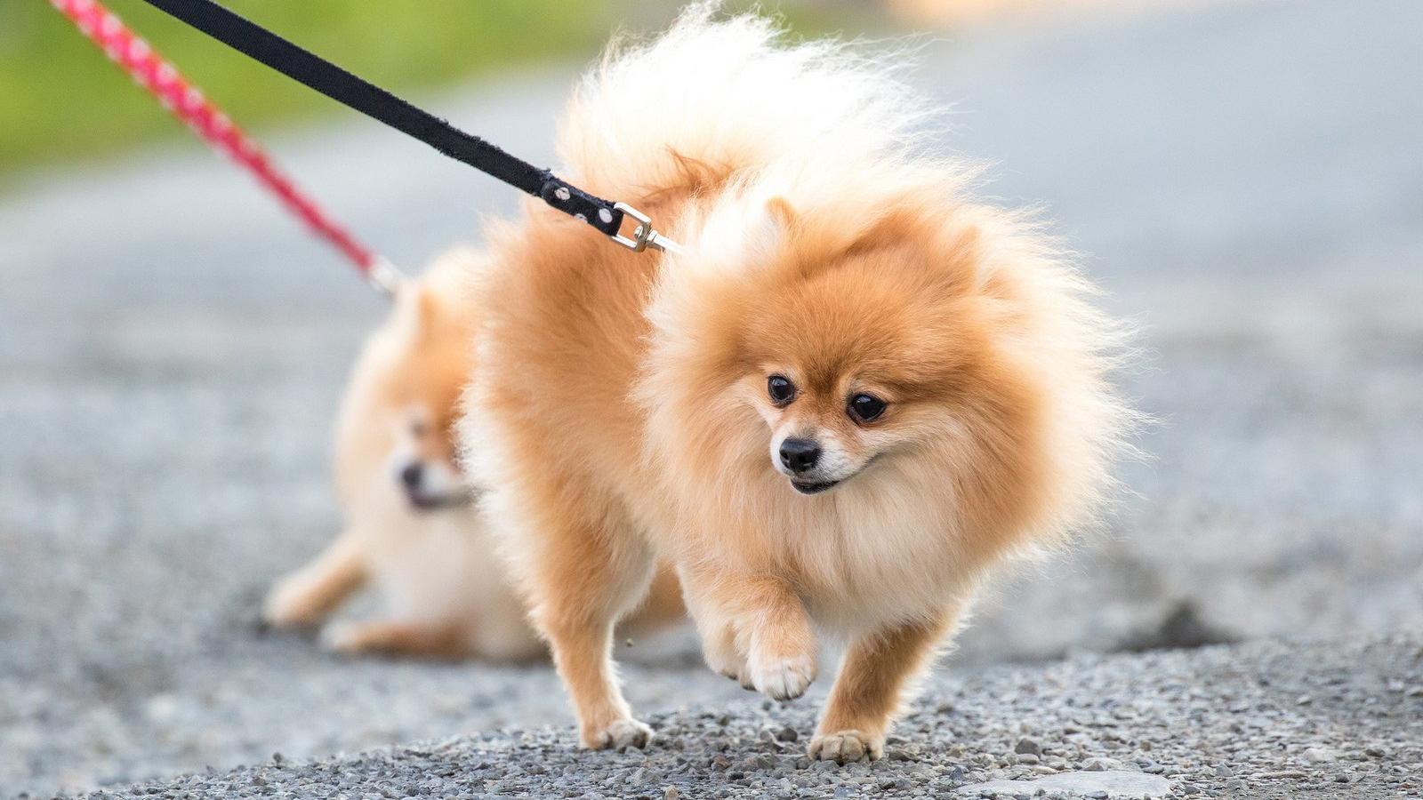 Доказана возможность заражения собак коронавирусом от людей