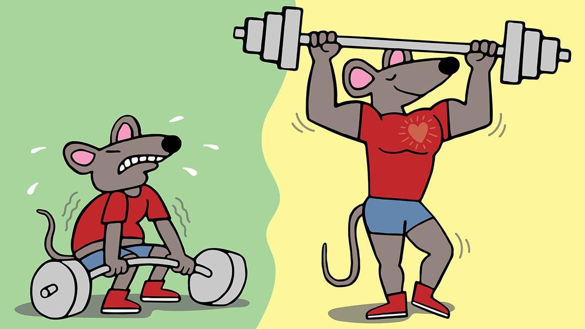 Генная терапия помогает нарастить мышцы