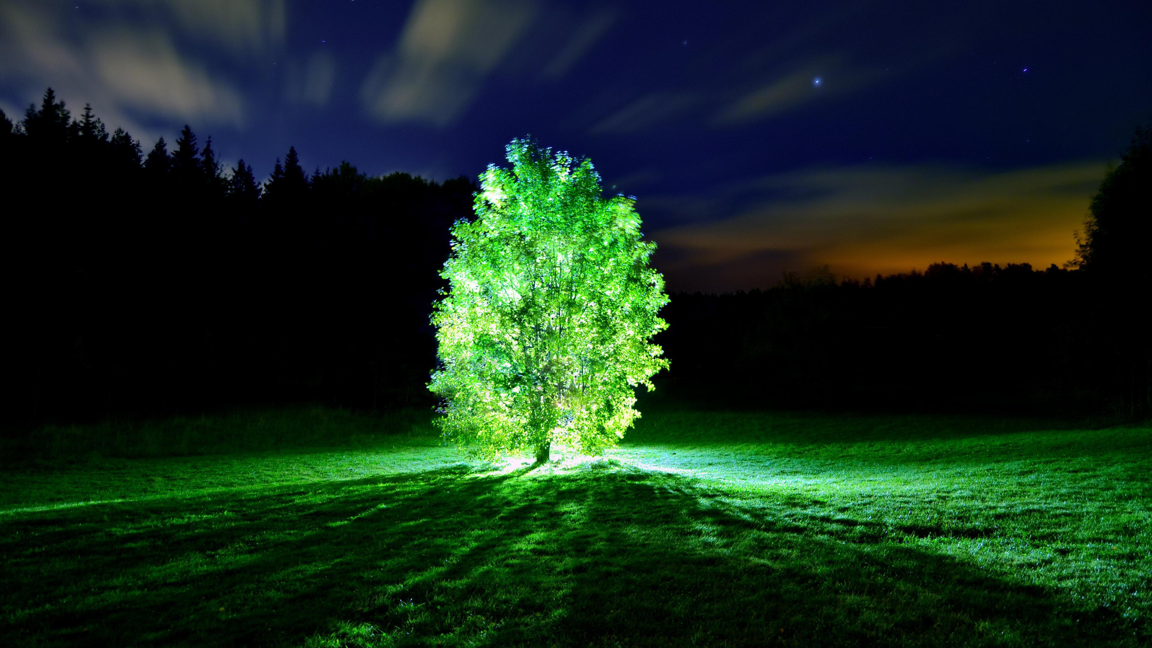 Фотосинтез улучшили на двадцать процентов