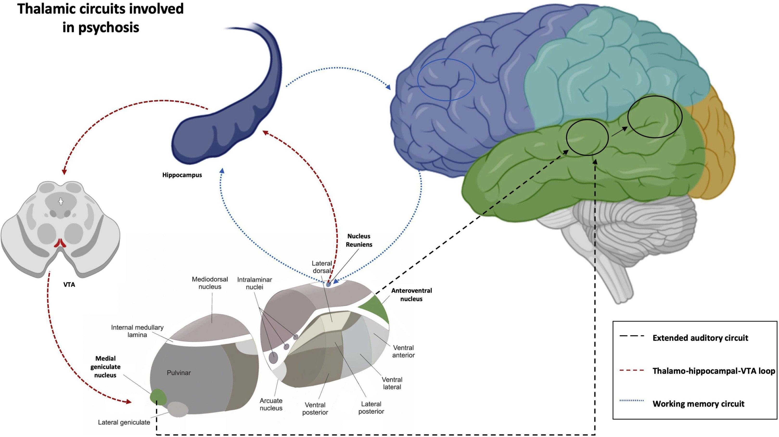 Шизофрения: «игра» таламуса со слухом