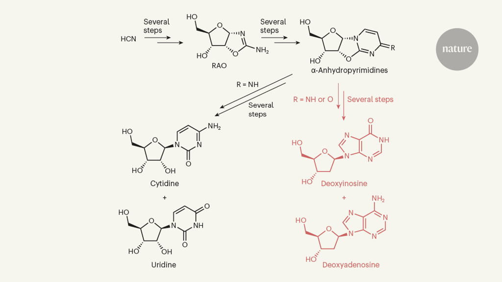 Химики подтвердили возможность одновременного появления ДНК и РНК на заре жизни