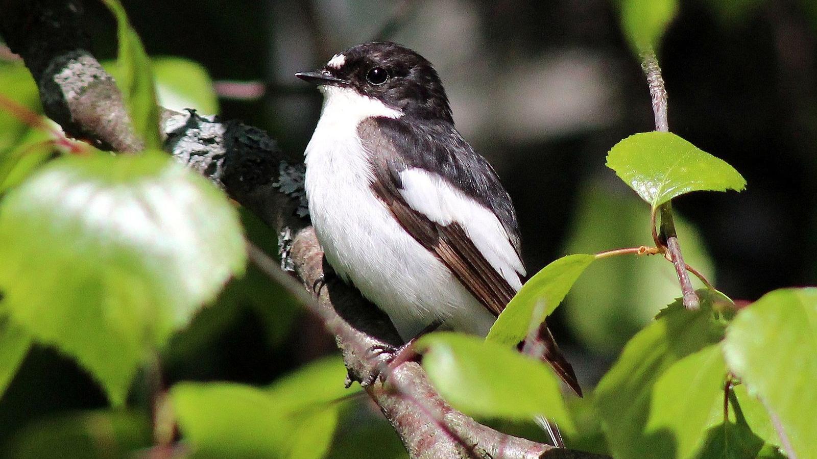 Ученые назвали птиц с самым быстрым зрением