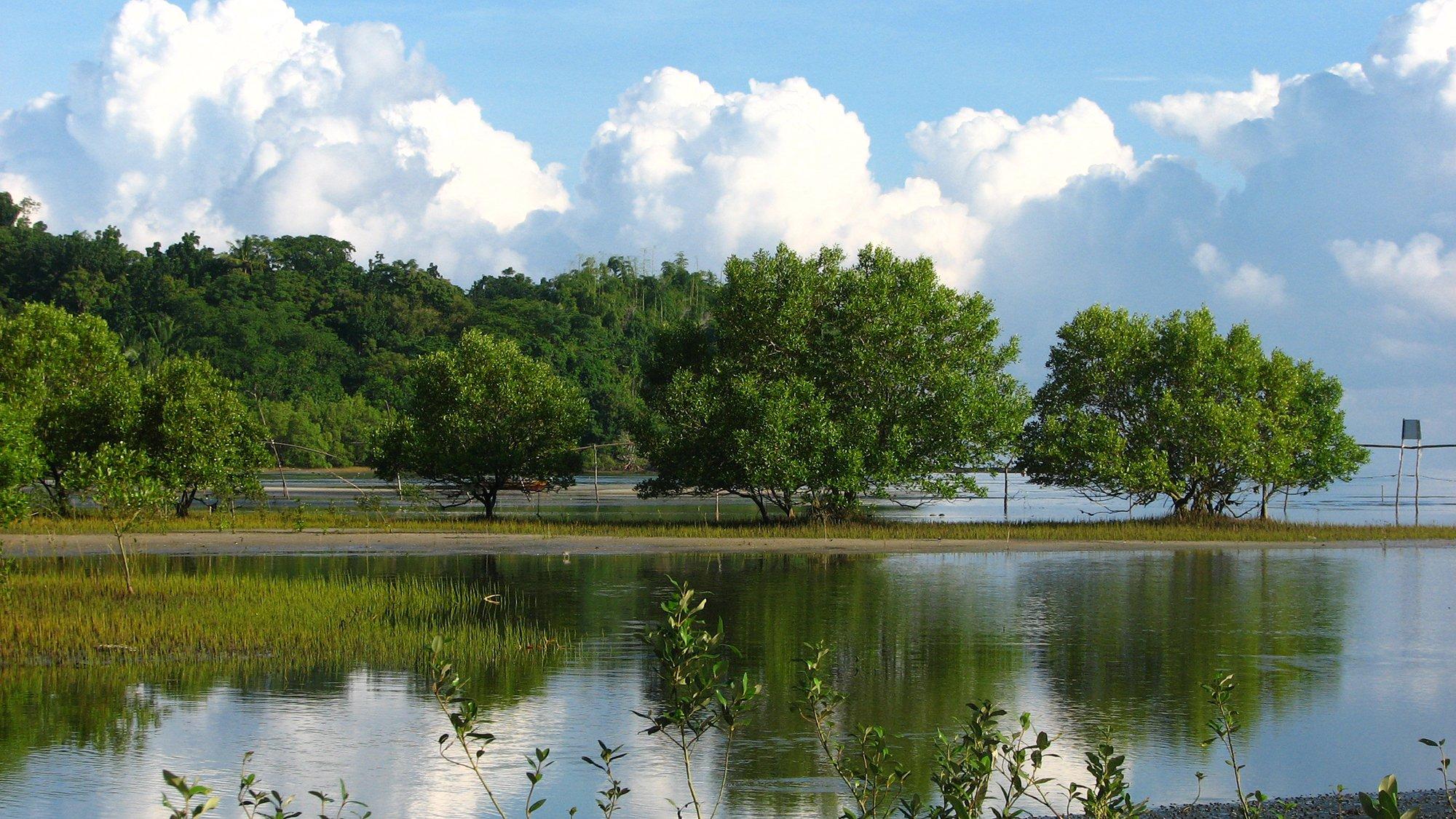 Подъем уровня океана грозит полностью уничтожить мангровые леса в XXI веке