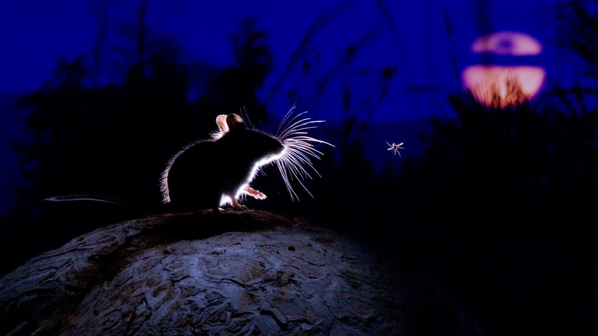 У мышей обнаружили нейронный путь развития депрессии от ночного освещения
