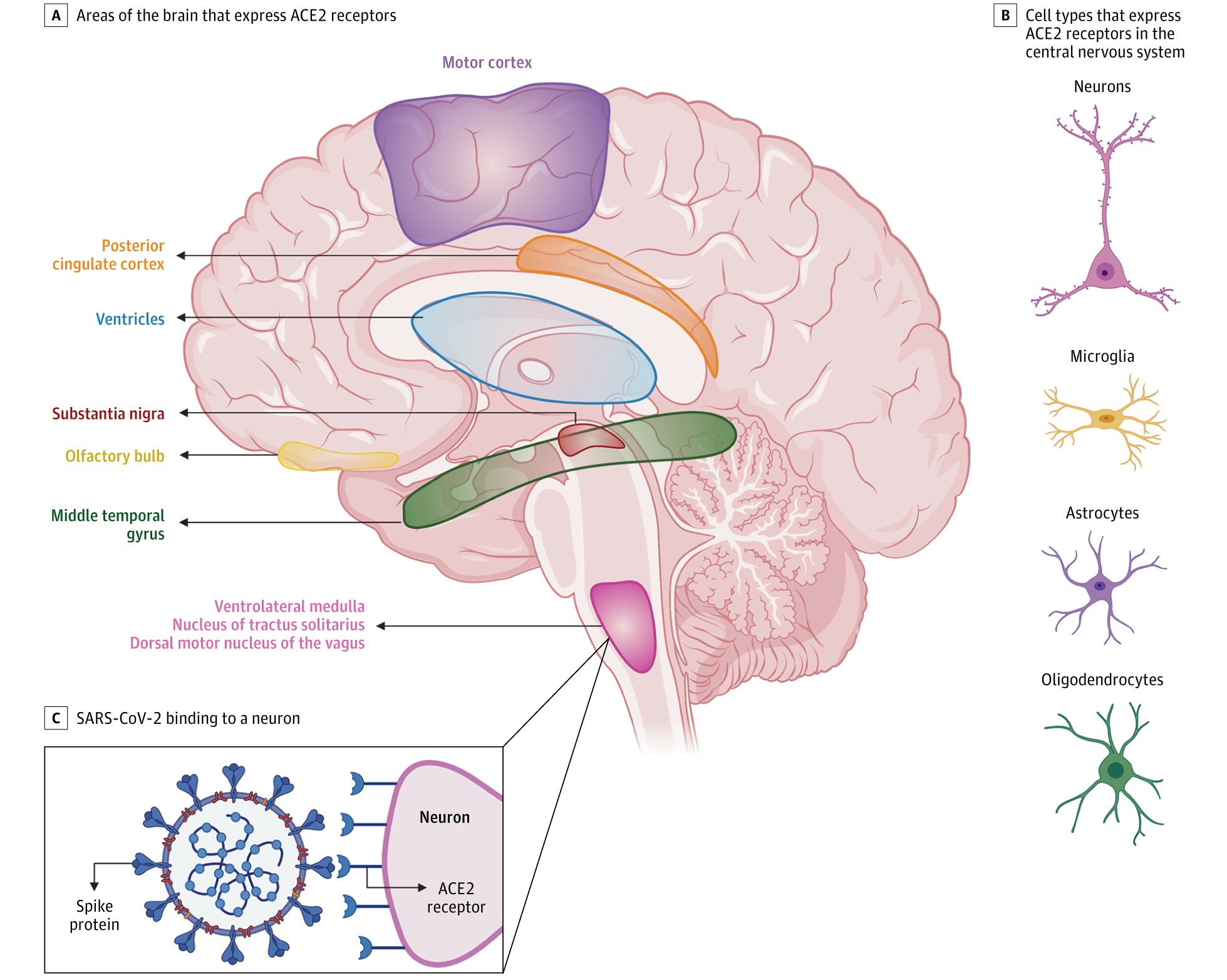COVID-19 и неврология