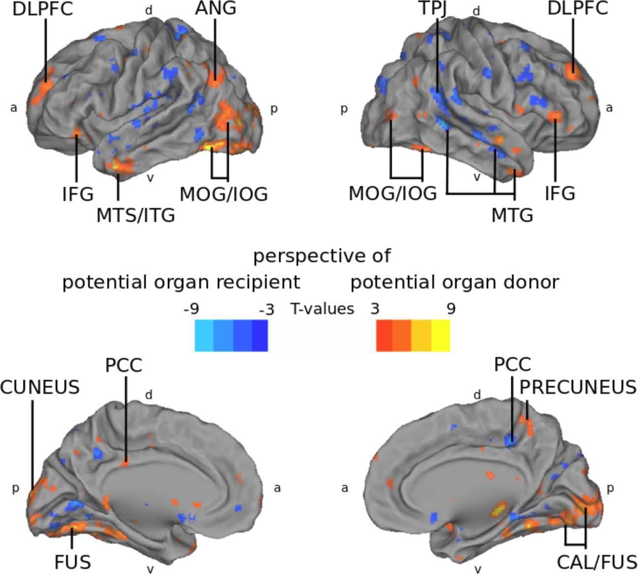 Исследователи смогли «увидеть» эмпатию