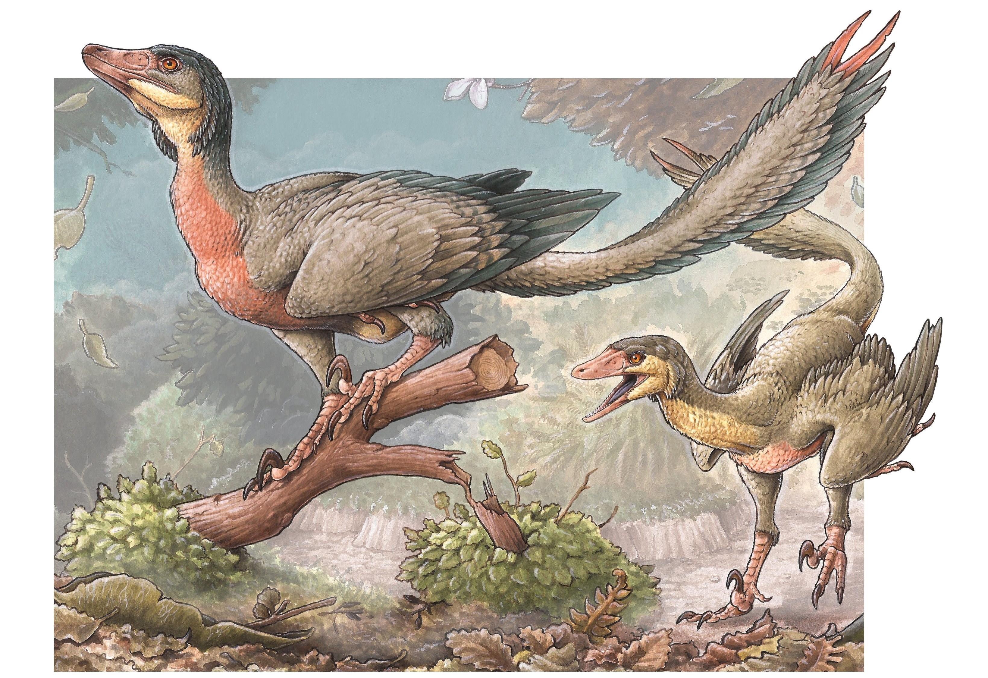 Ученые открыли новый вид динозавров с похожими на крылья передними конечностями
