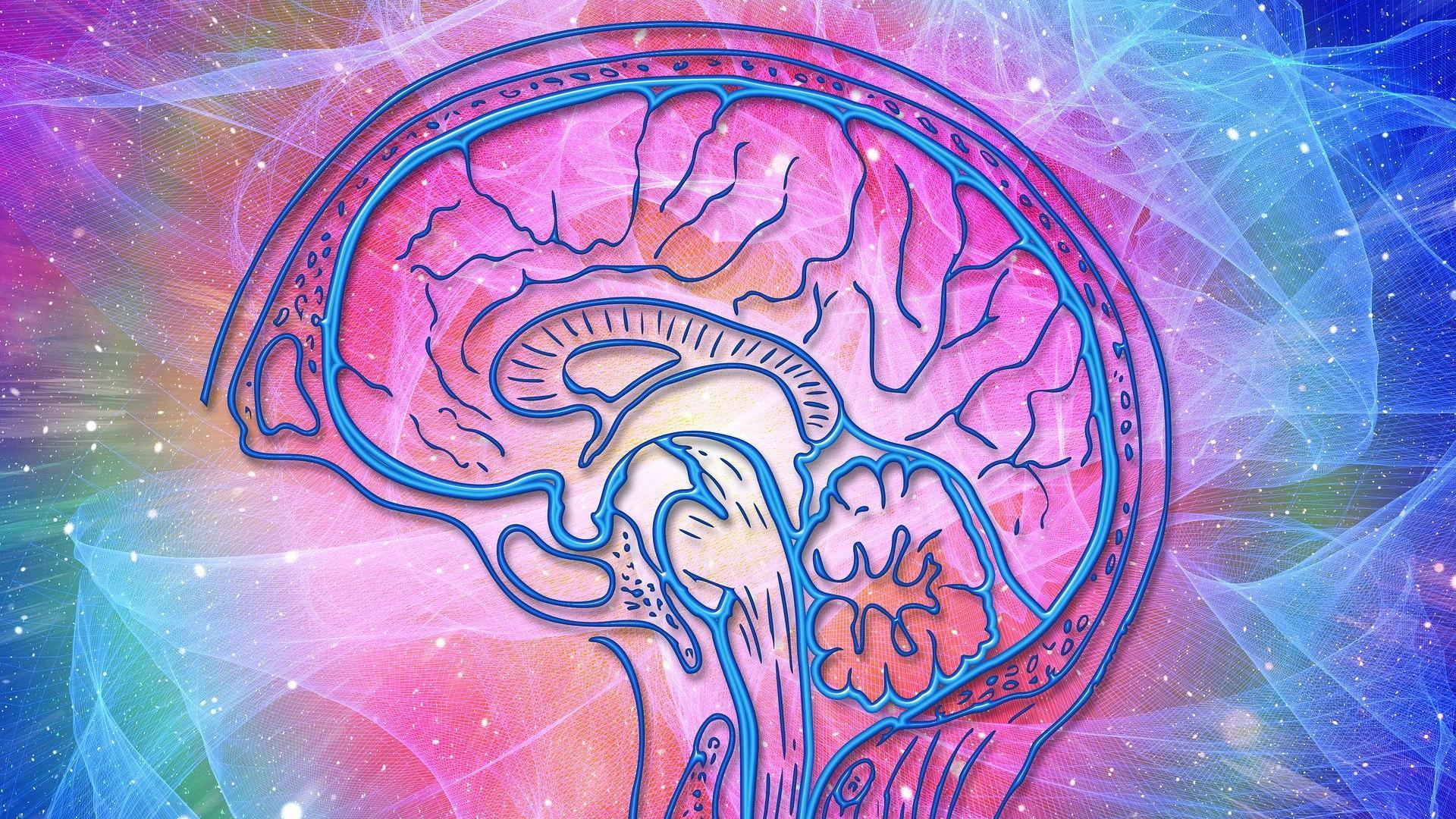 Болезнь Паркинсона зарождается в кишечнике: новые доказательства