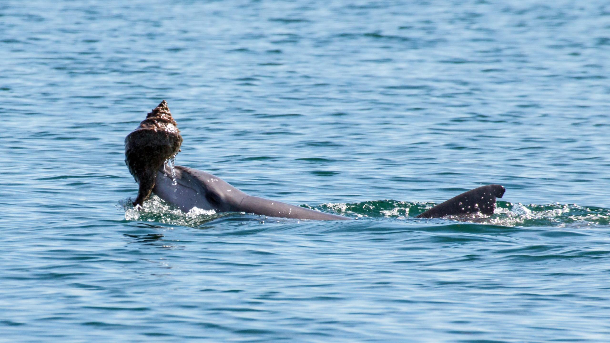 Дельфины оказались способны к обмену знаниями