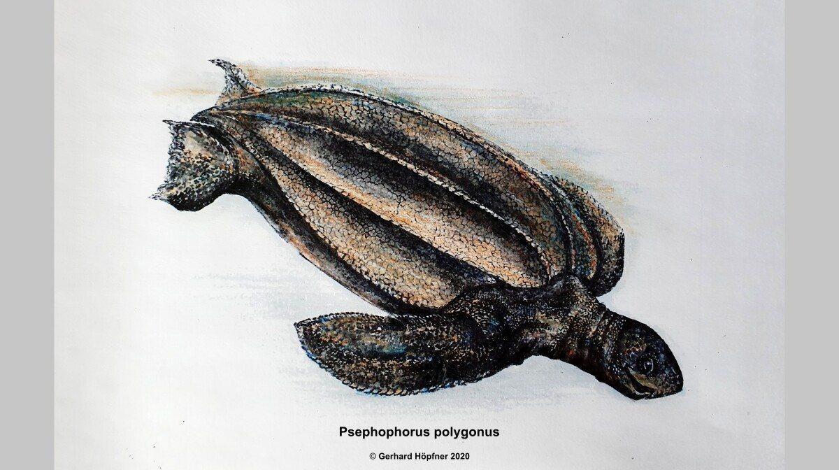 В Германии обнаружены останки древней двухметровой черепахи
