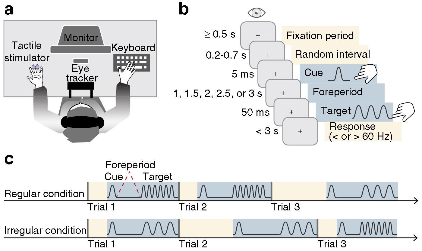 Отсутствие микросаккад связали с быстрой реакцией на прикосновение