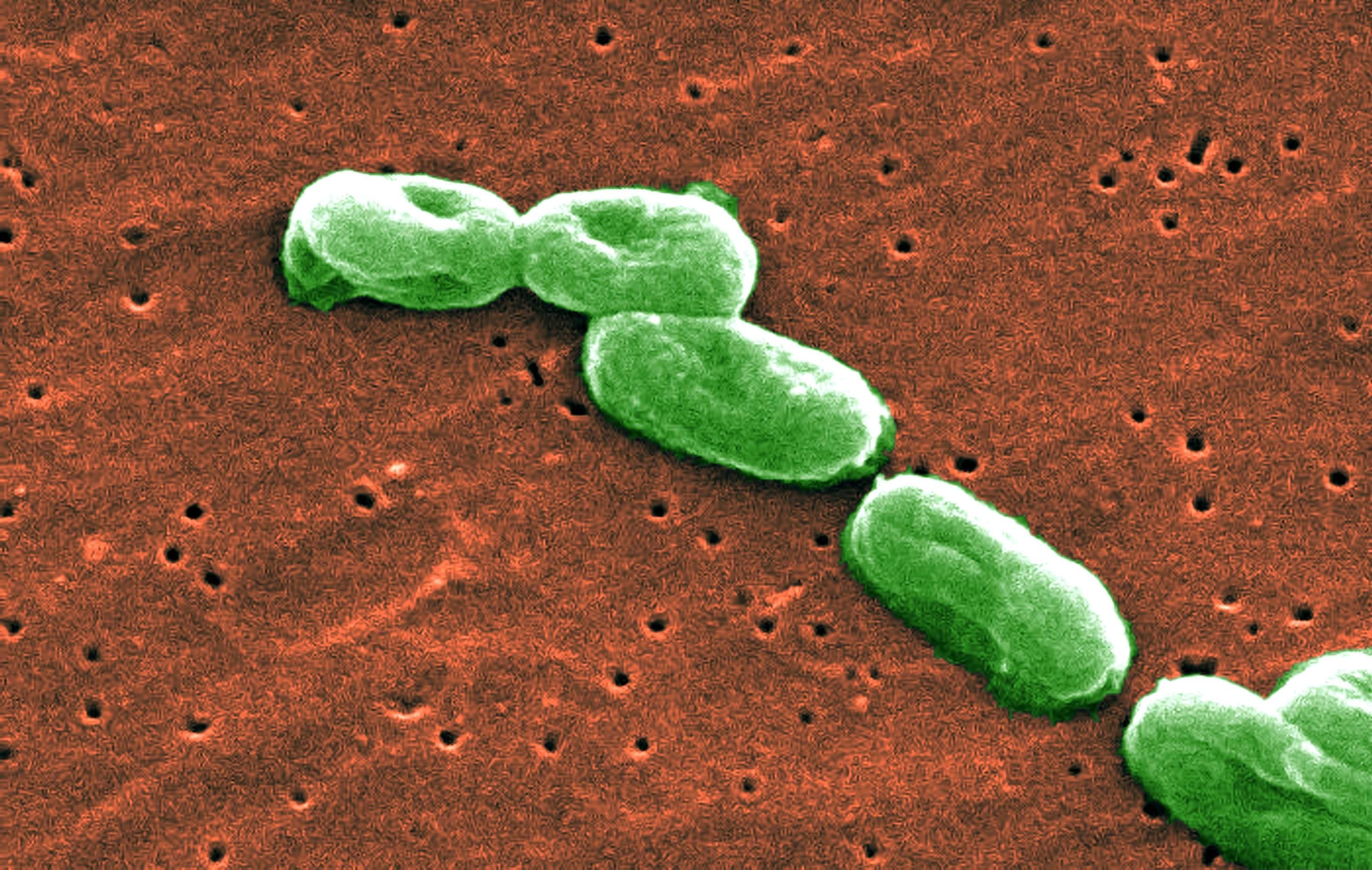 Ученые впервые внесли целевые изменения в митохондриальную ДНК