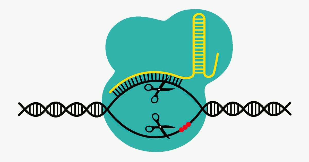 Мутантный фермент улучшает инструмент генетической модификации