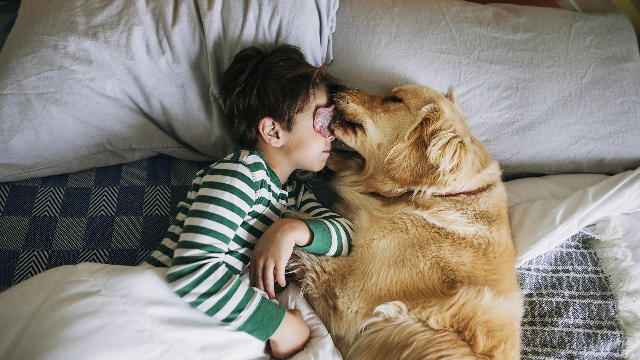 Собаки помогли эмоционально-социальному развитию детей