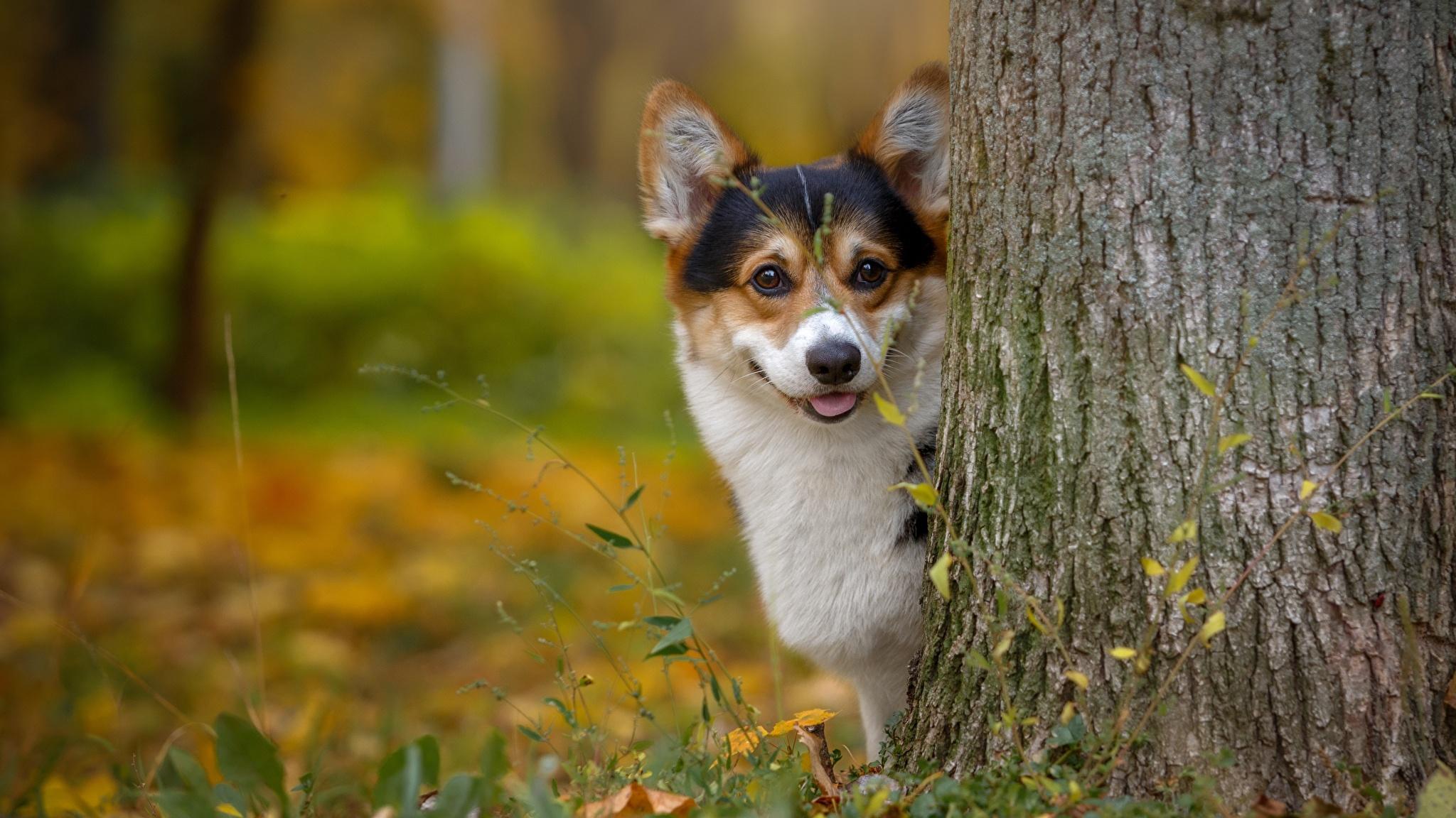 Эксперименты подтвердили способность собак ориентироваться по магнитному полю Земли
