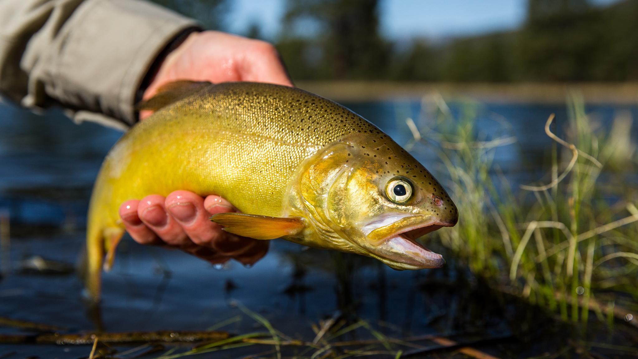 Рыба может защитить головной мозг от вредного действия грязного воздуха