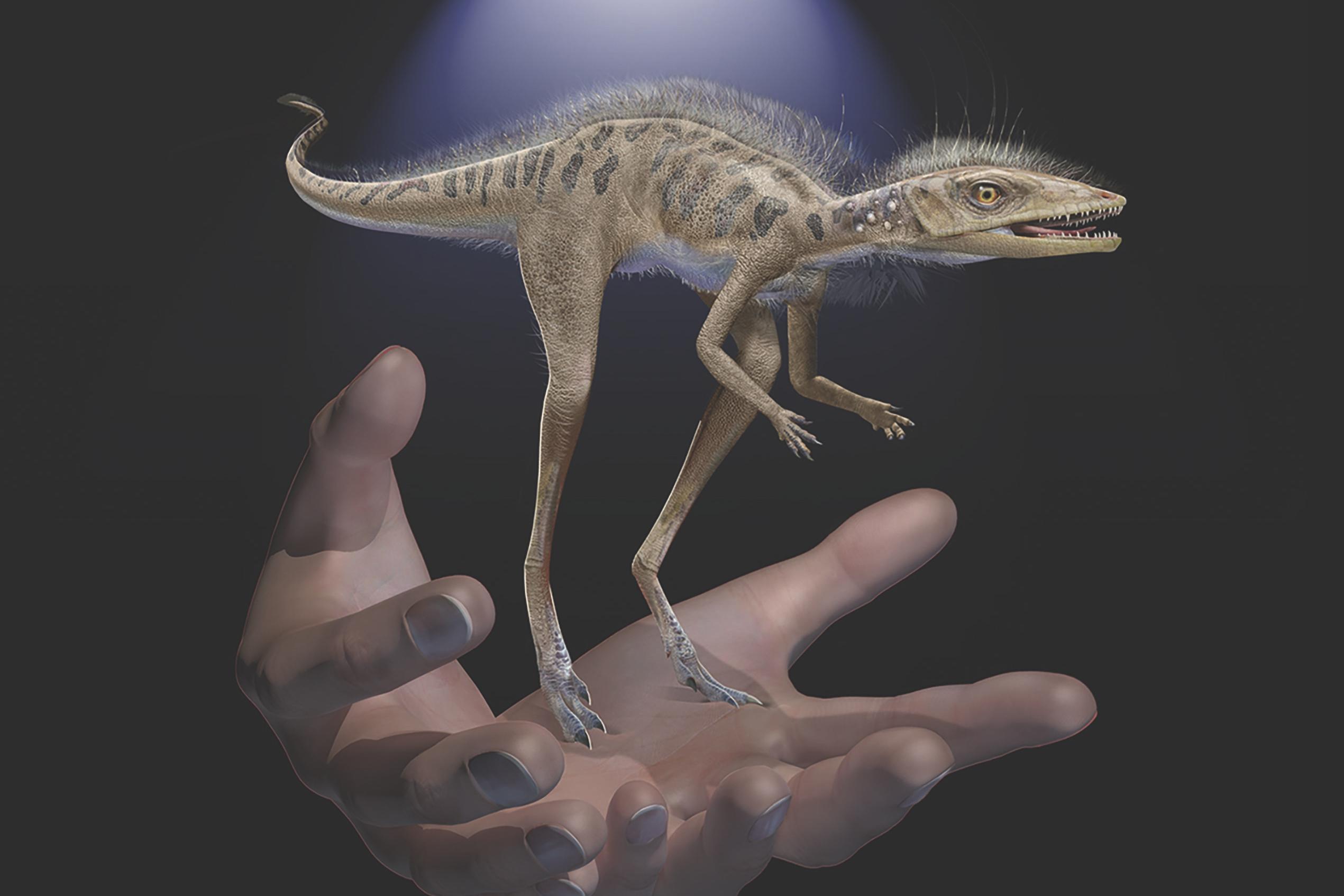 Обнаружены останки миниатюрного предка динозавров и птерозавров