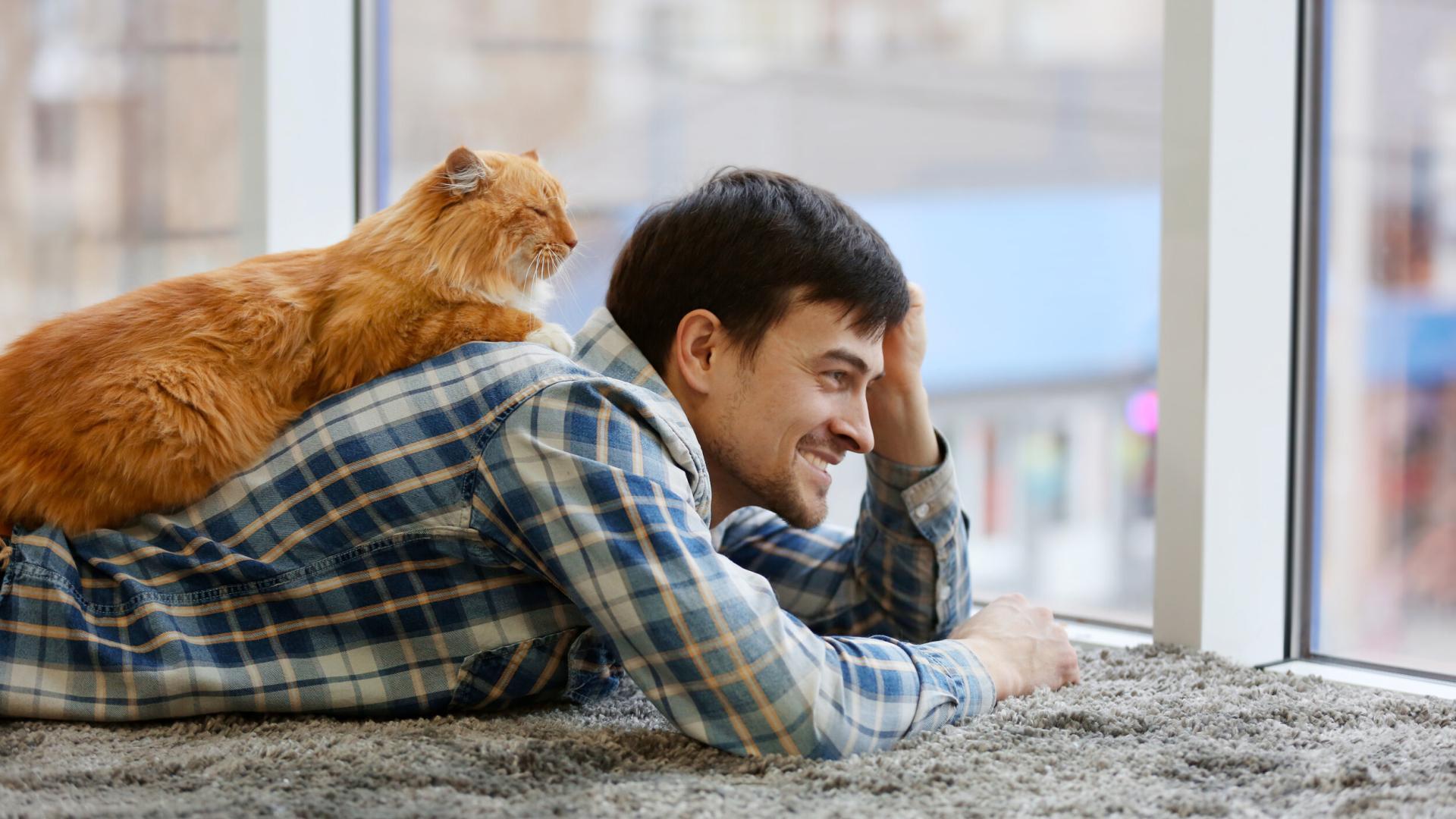 Котики против свиданий