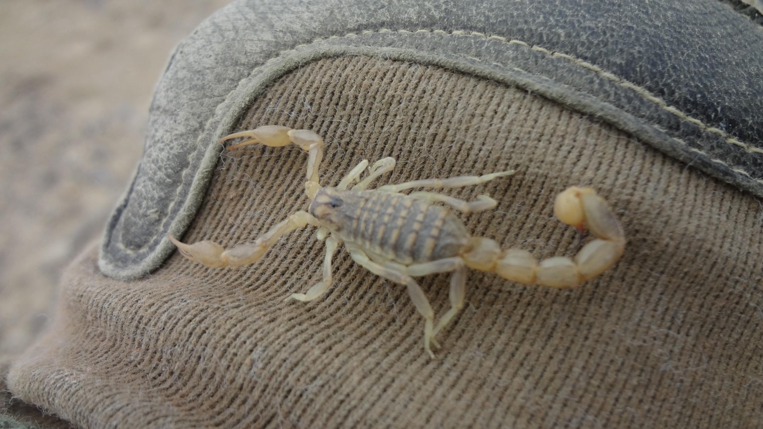Ученые создали лекарство против рака и аутоиммунных заболеваний из яда скорпиона