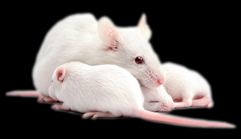 В молодой мозг белков из крови проникает больше, чем в стареющий