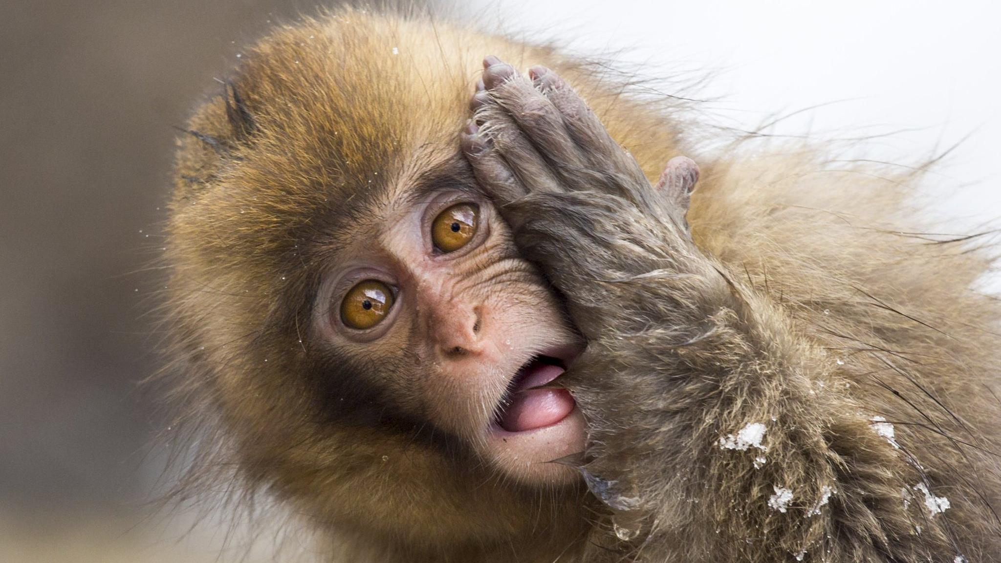 Оптогенетические движения: впервые на приматах