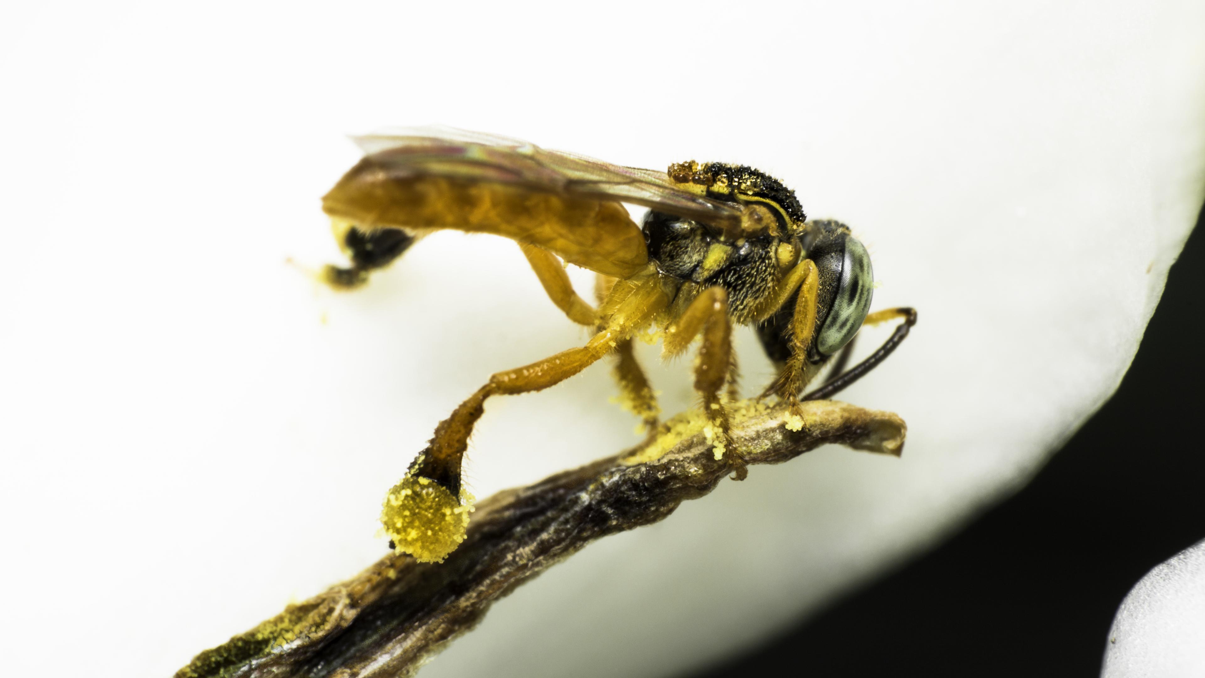 Учёные нашли мёд «для диабетиков»