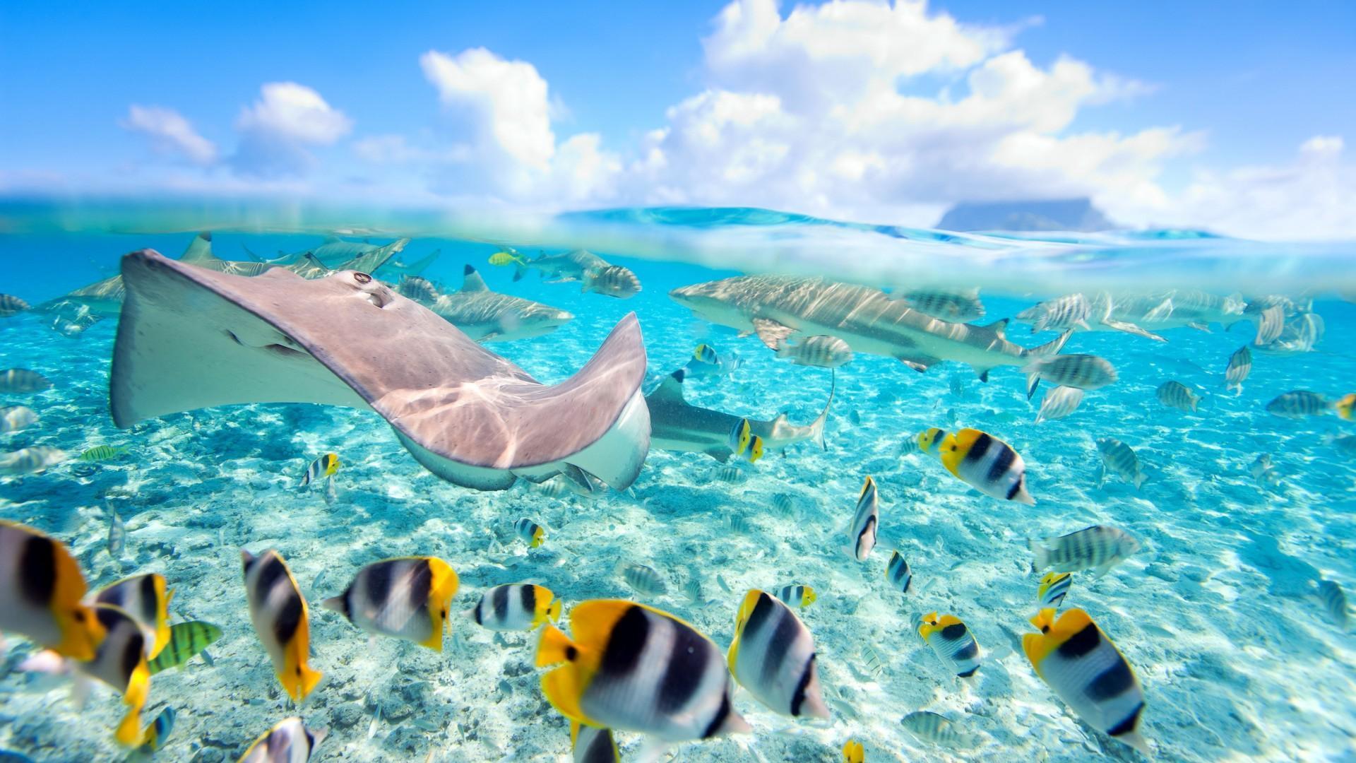 Морским и пресноводным рыбам пообещали проблемы с размножением к концу века