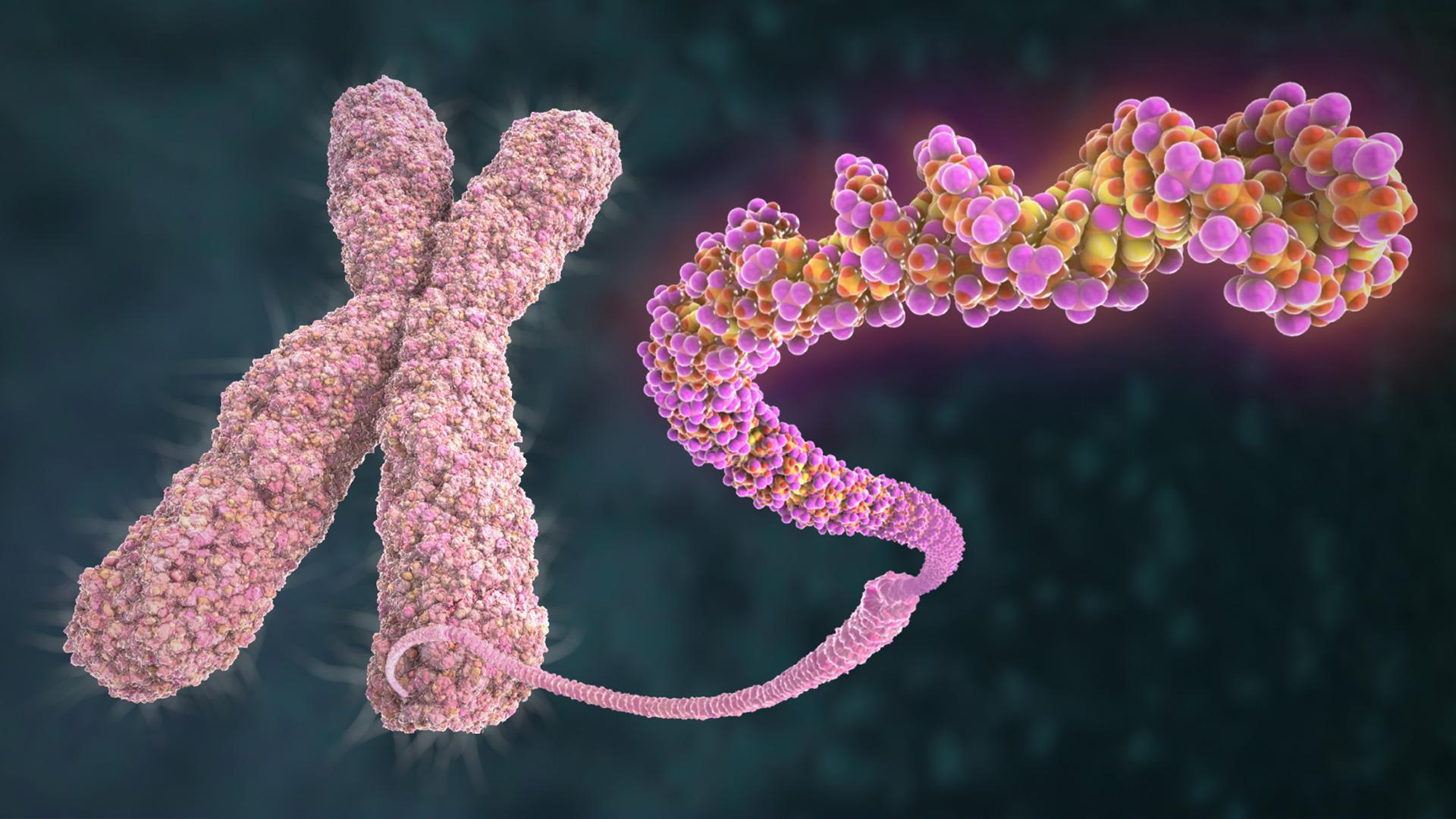 Ученые полностью расшифровали Х-хромосому