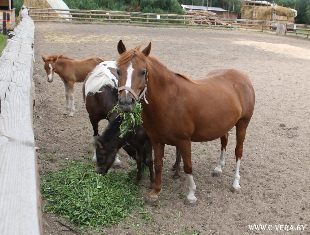 «Мы едем к лошадке! Ее зовут Мара». Дневники иппотерапии: как это происходит