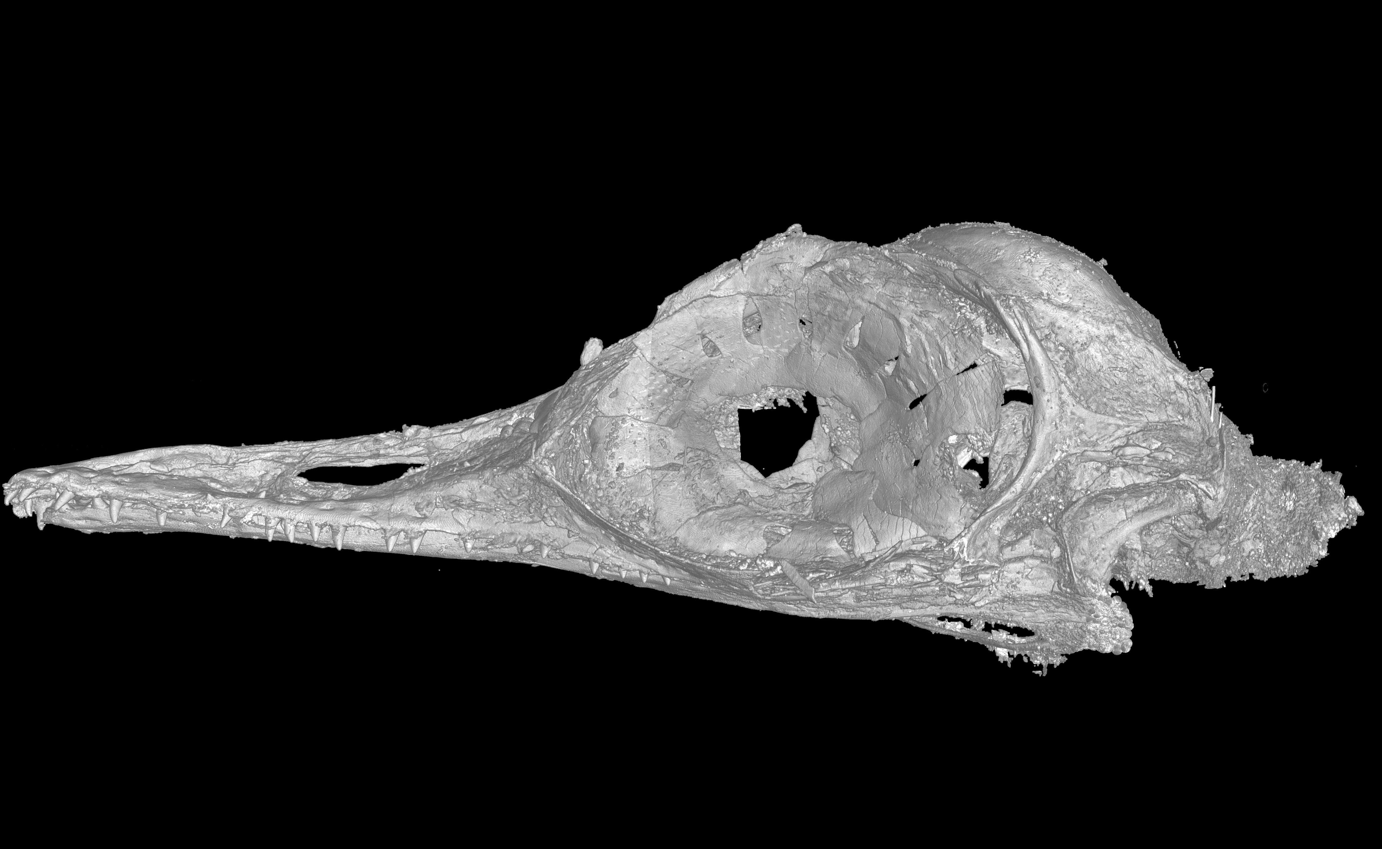 «Самый маленький динозавр» оказался ящерицей