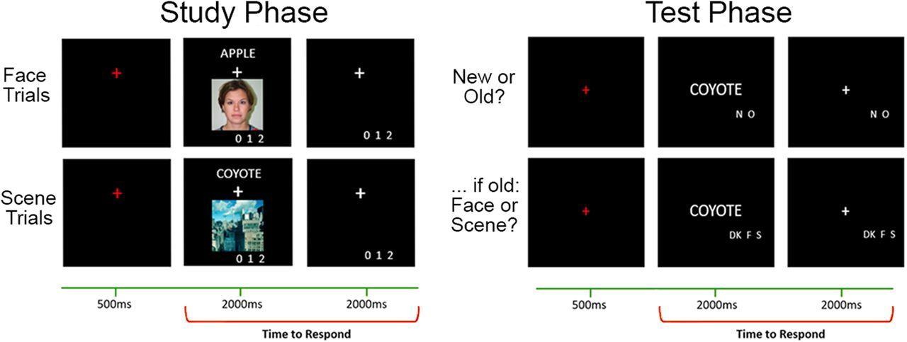 Как возрастные изменения восприятия связаны с памятью?