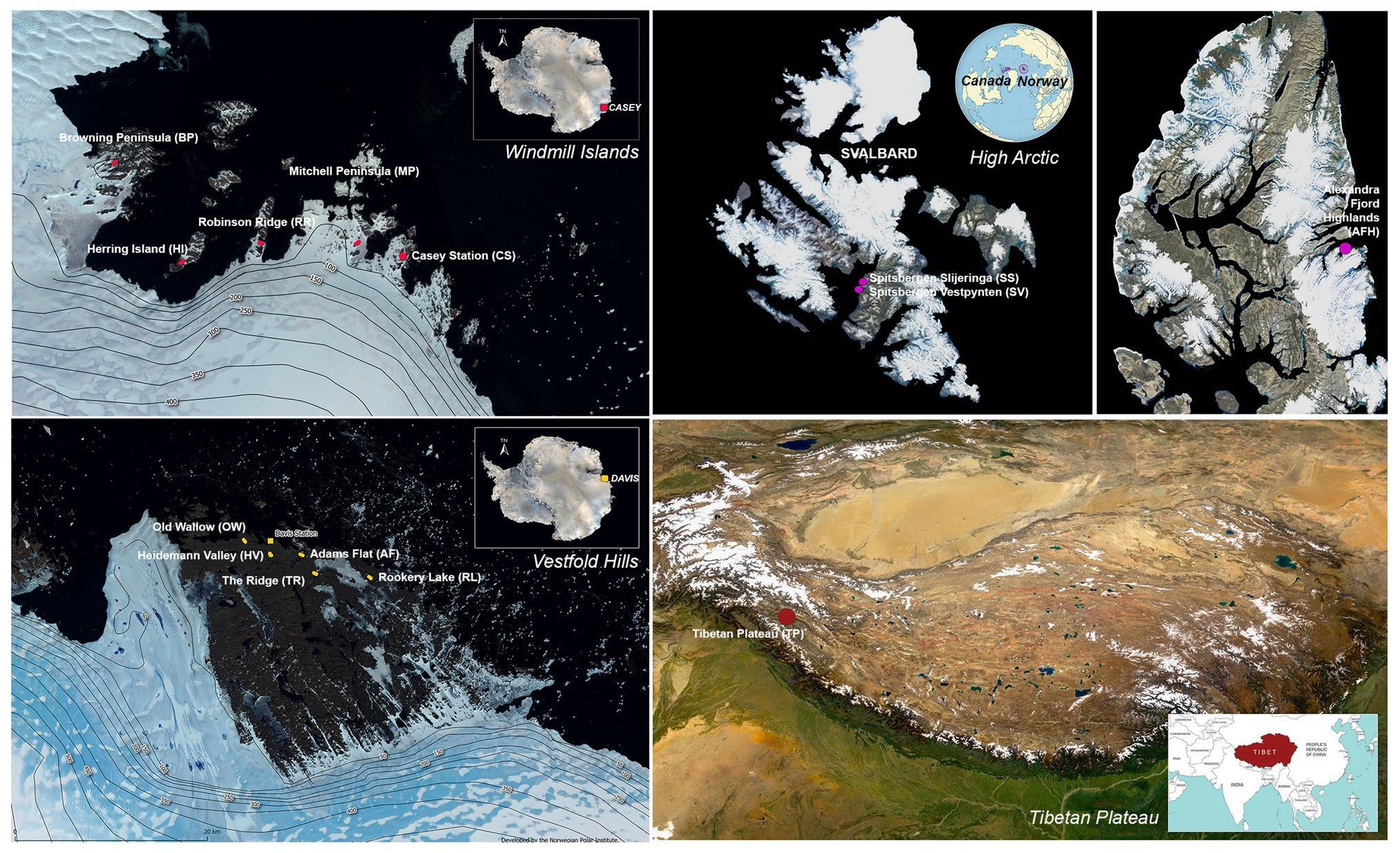Непритязательные микробы населяют три полюса мира
