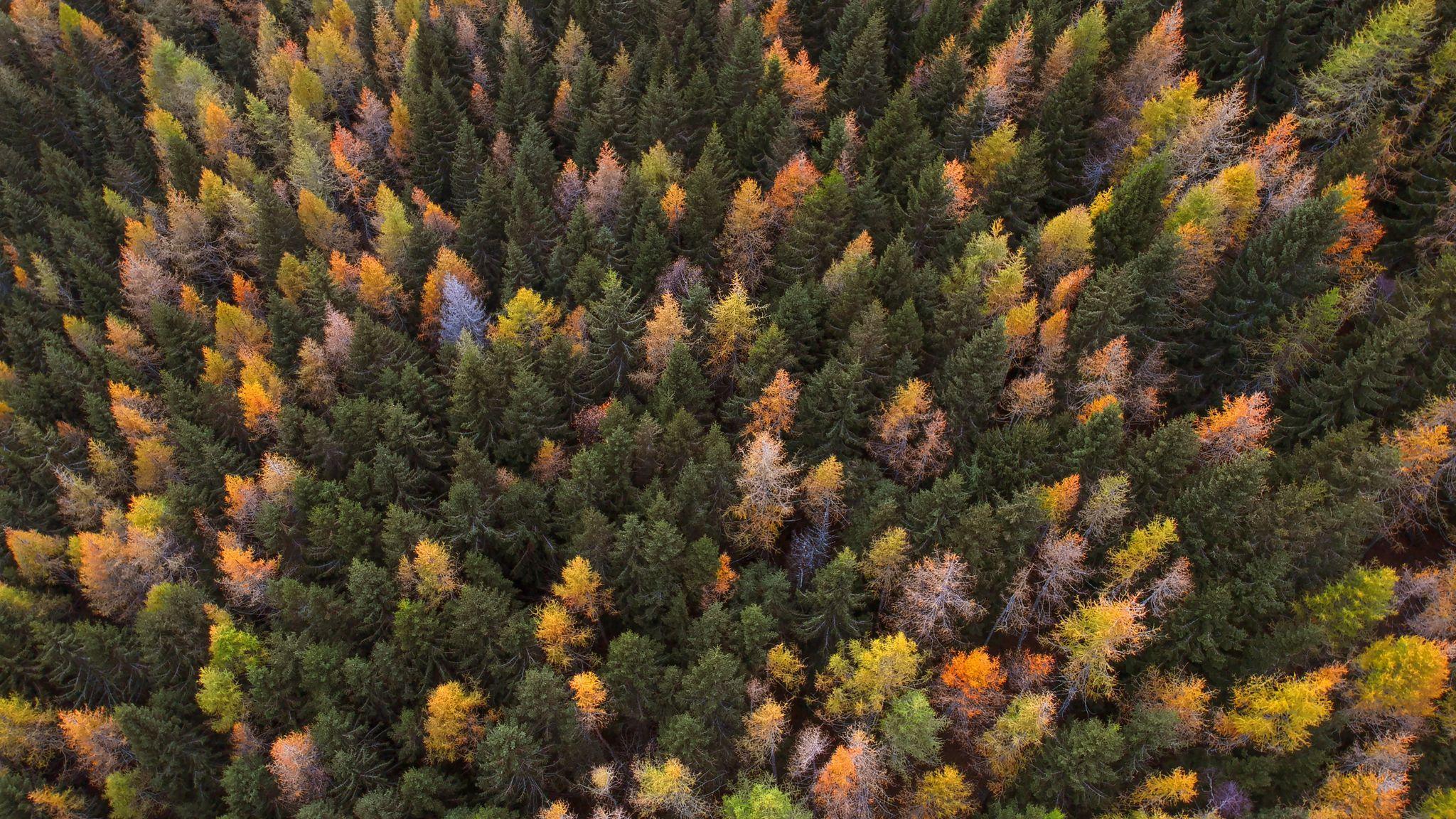 Какое значение на планете имеет лесной покров?