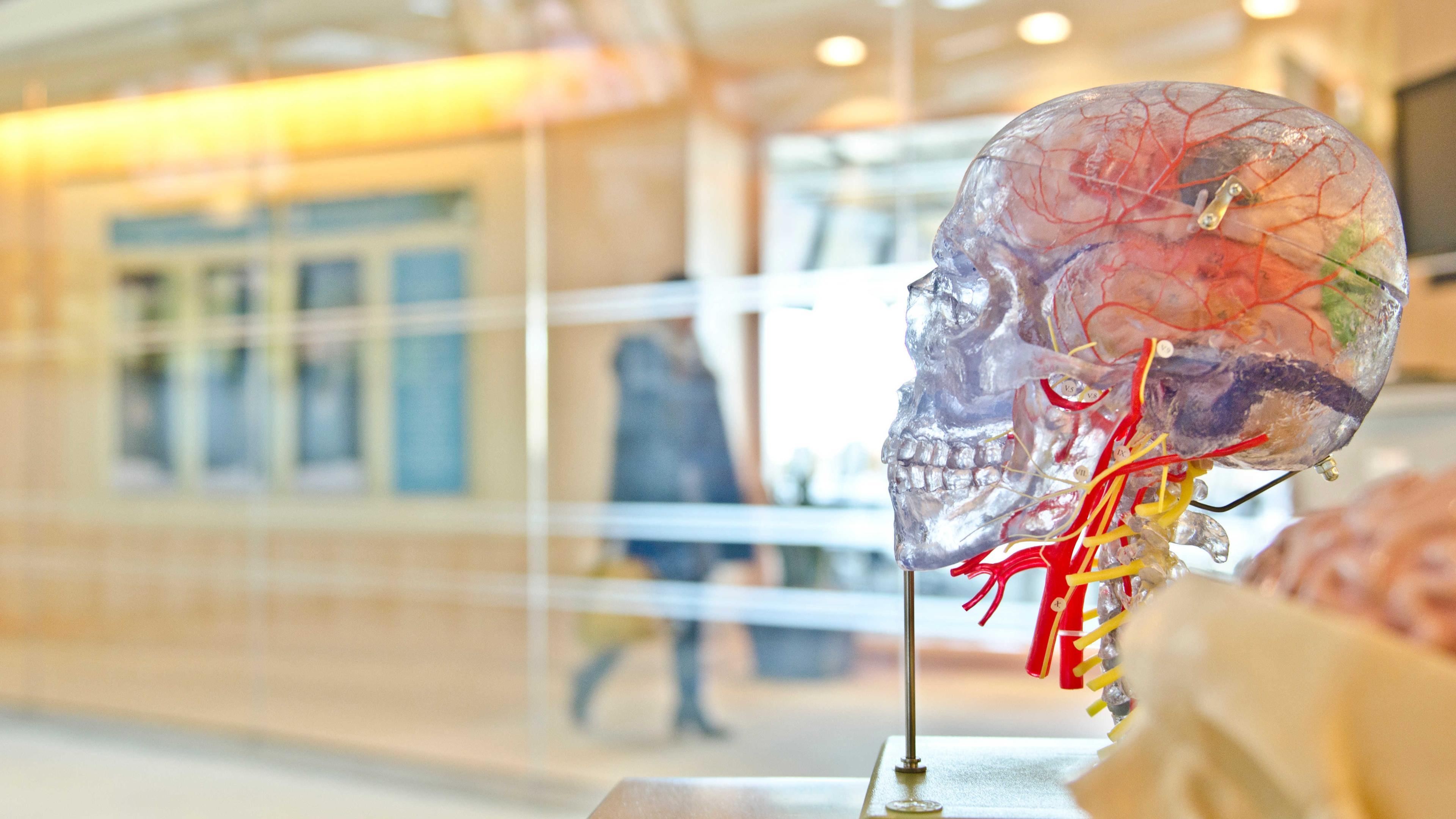 Что раньше: нарушение кровотока в мозге или нейродегенерация?