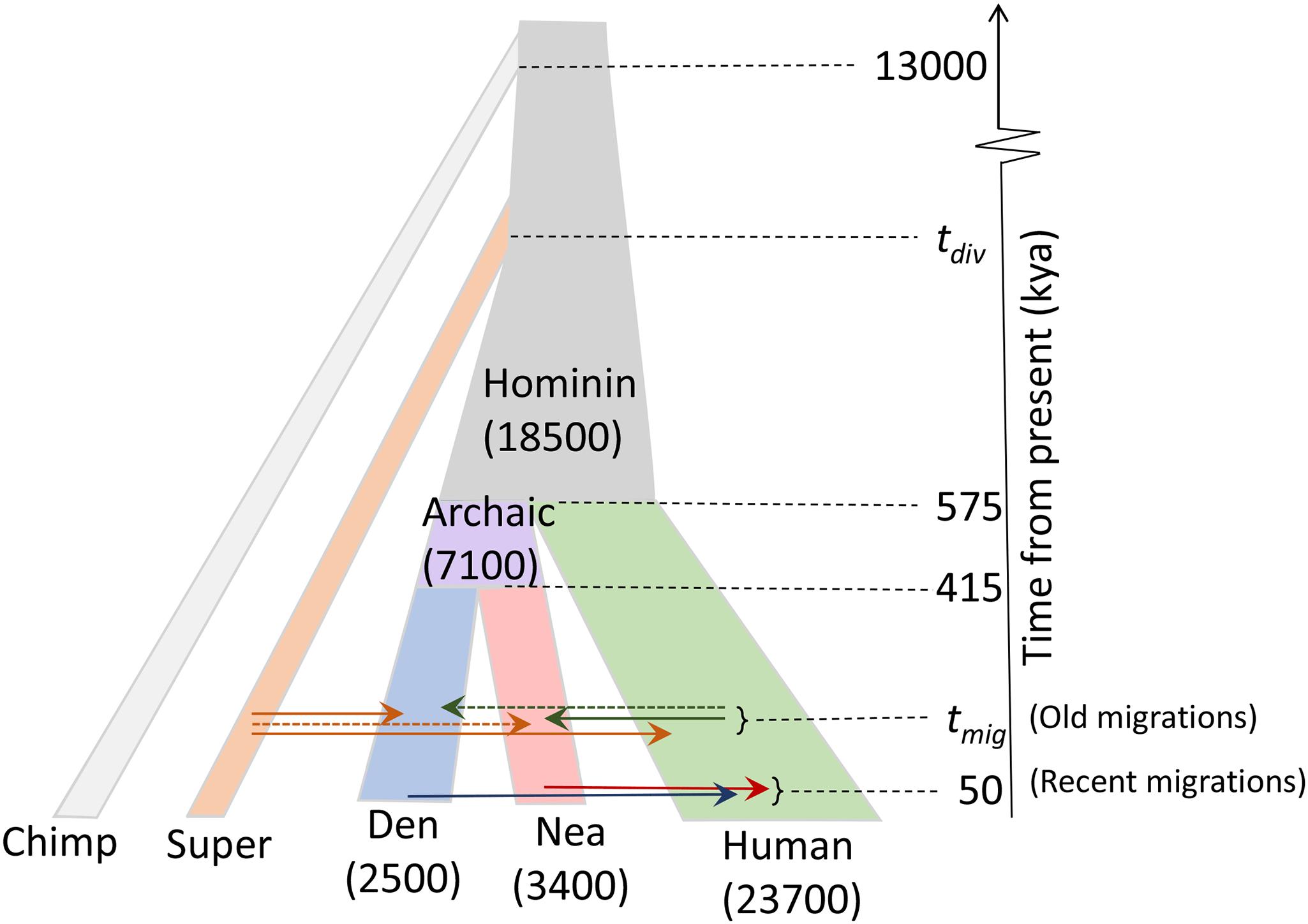 В ДНК неандертальцев и денисовцев нашли след неизвестного предка человека