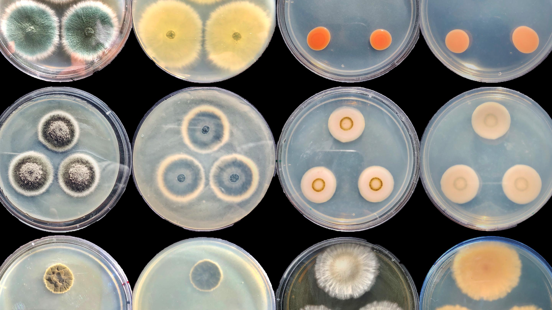Микробы-«зомби» переопределяют границы энергии жизни