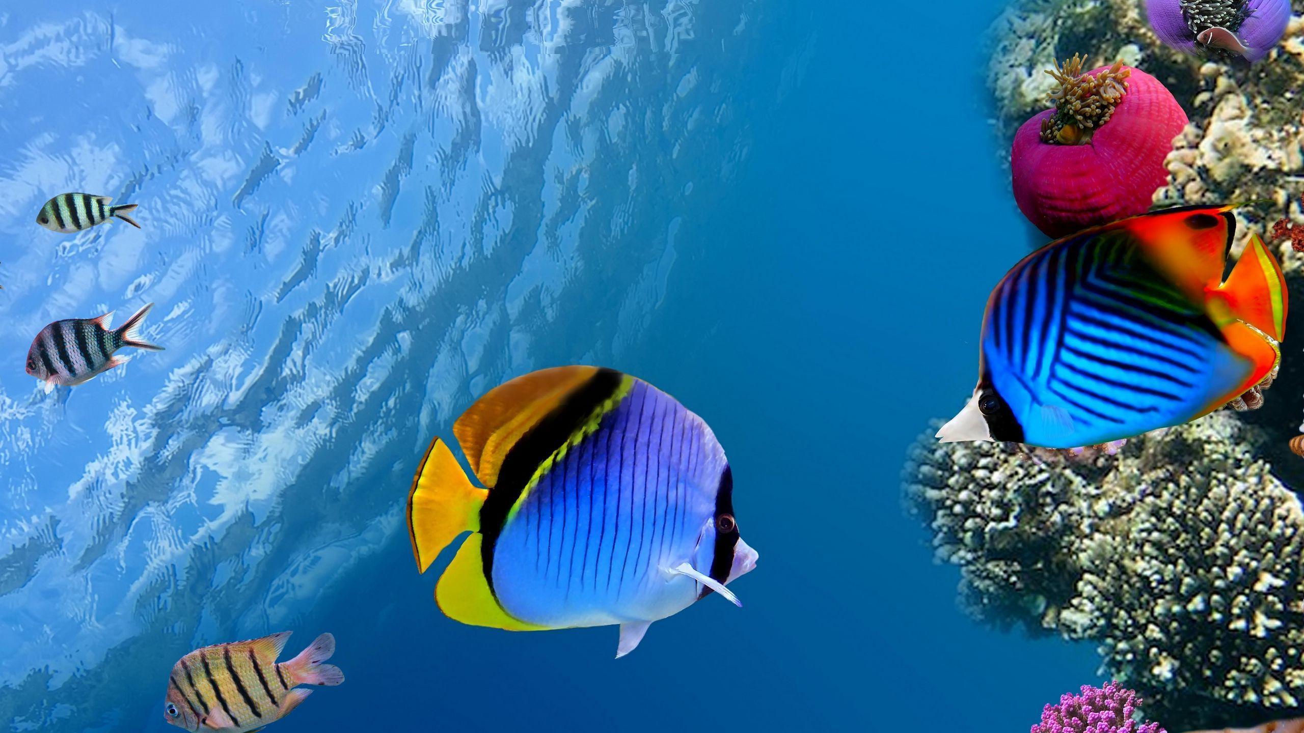 Морские экосистемы не справятся с повышением температуры, вызванным изменением климата