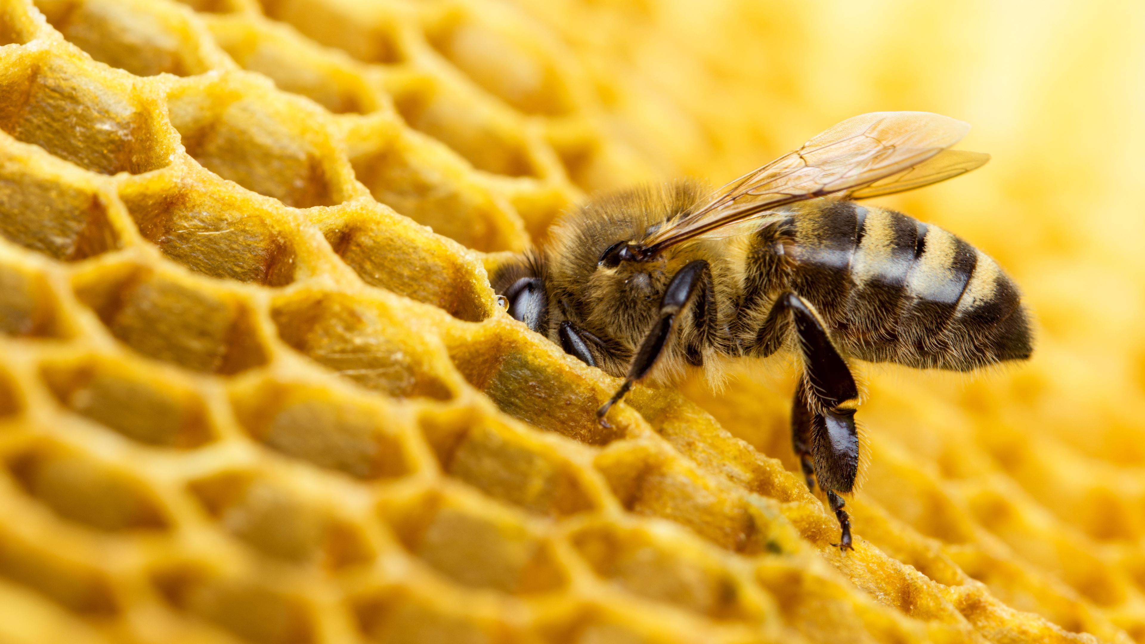 Пчелиный яд против агрессивных видов рака молочной железы