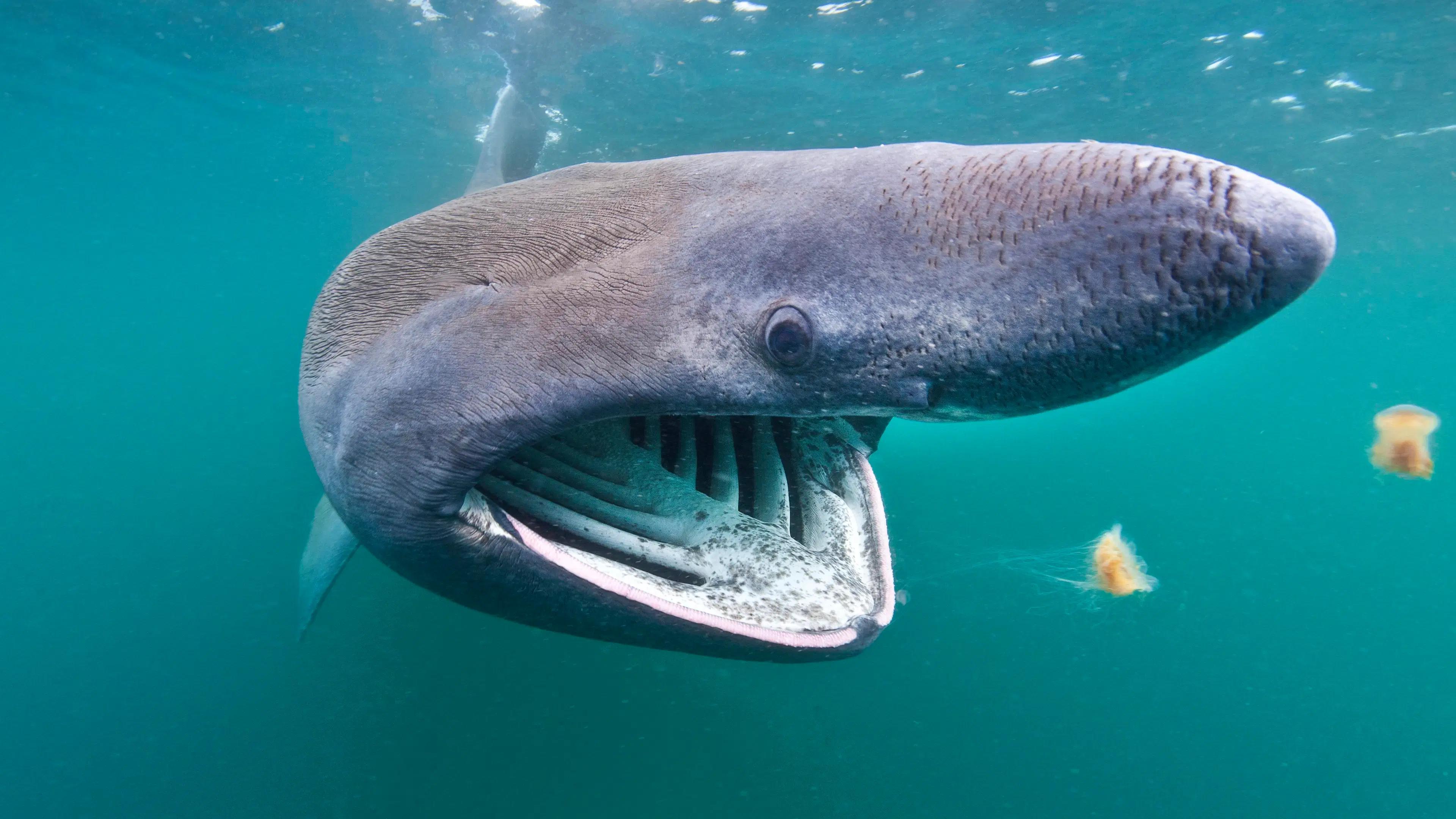 Экологи подсчитали, сколько акул придется убить ради производства вакцины от коронавируса