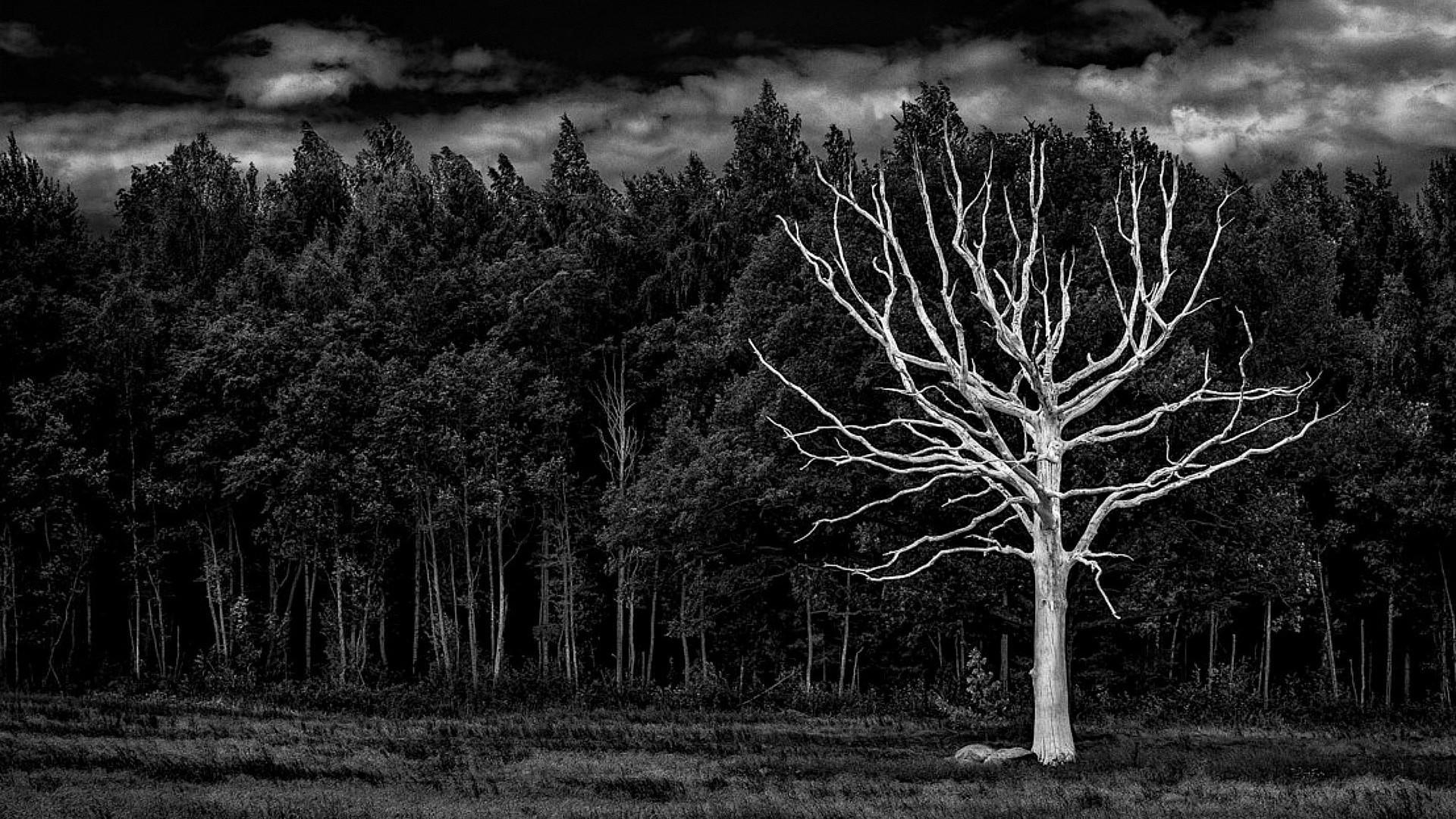 Ученые засомневались в способности лесов спасти планету от глобального потепления