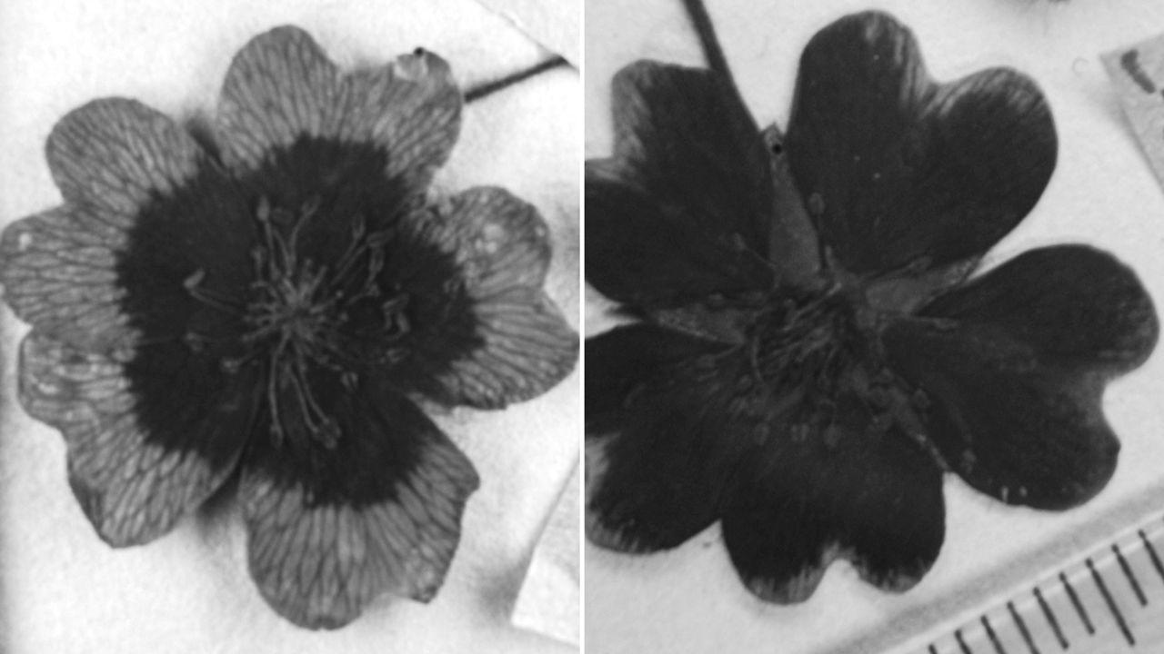 Из-за глобального потепления цветы меняют окраску