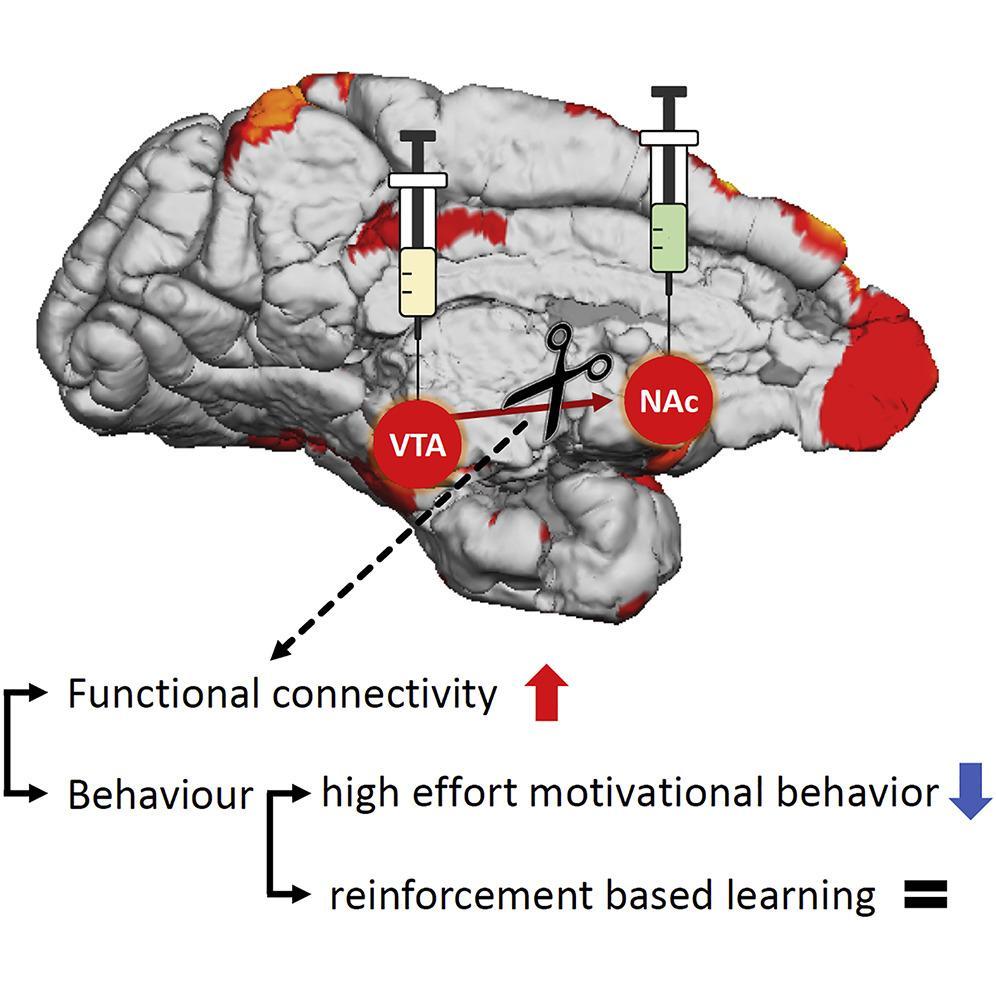 Нейрофизиологи впервые временно отключили связь между двумя областями мозга примата