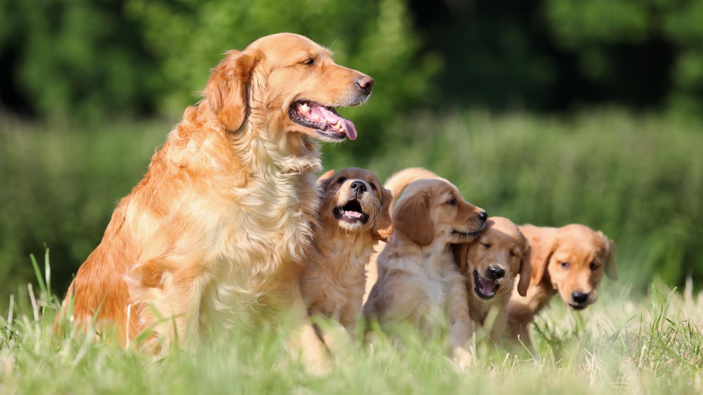 Обновлена формула определения возраста собак по человеческим меркам