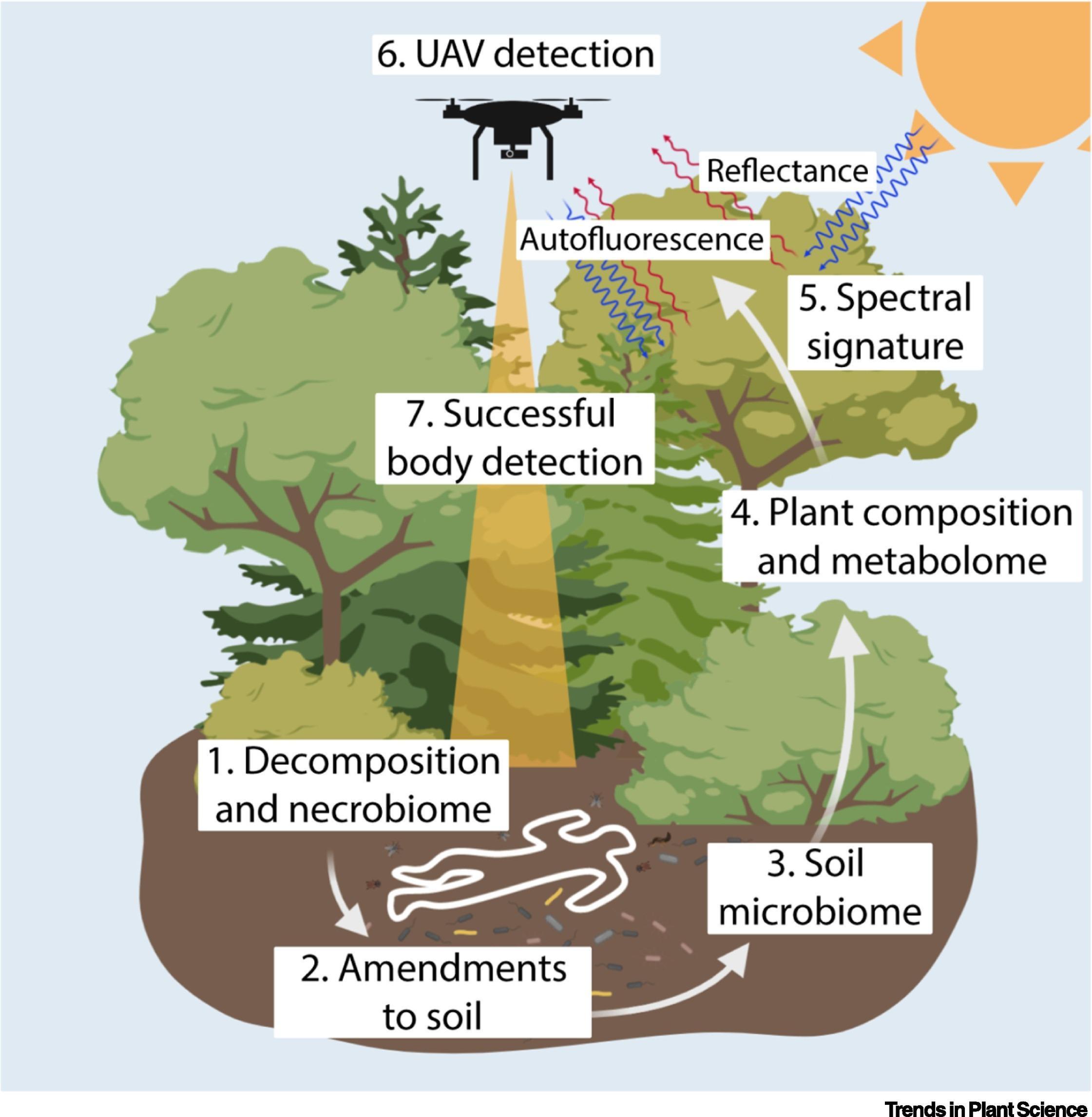 Деревья помогут найти тела пропавших в лесу людей
