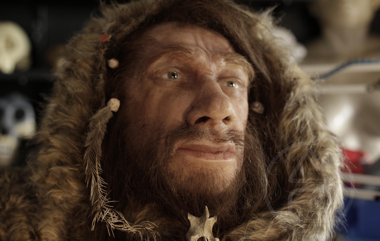 Поздние неандертальцы получили мужские половые хромосомы от предков современных людей