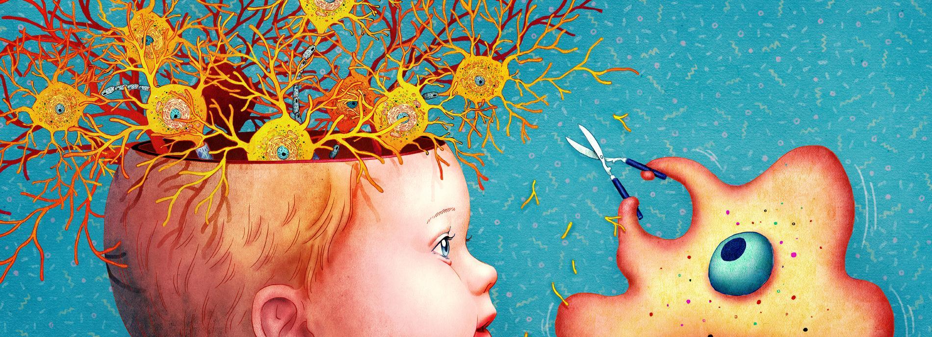 Иммунные клетки мозга управляют нервными сигналами